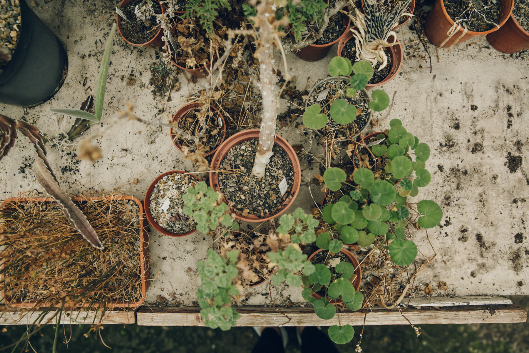 Looking down on plants in the potting shed