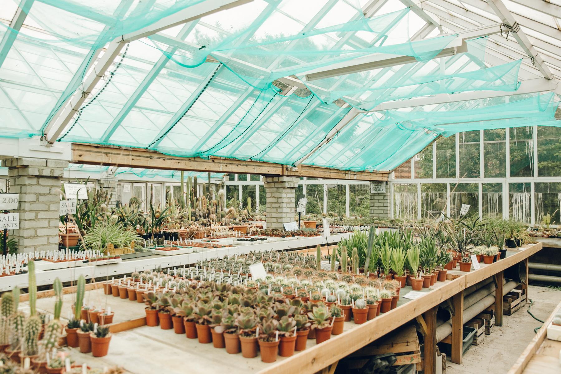 Inside a cactus nursery