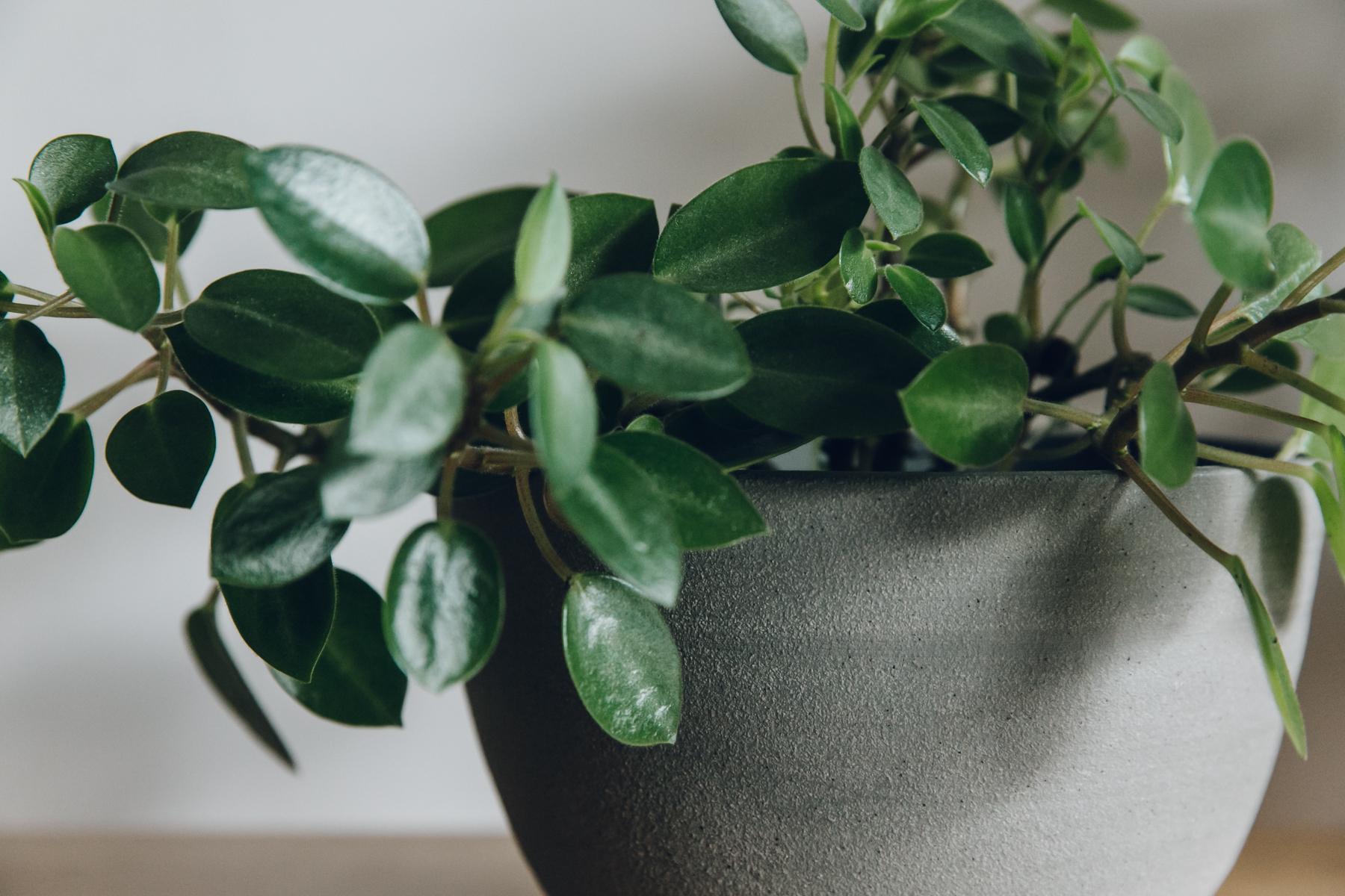Grey ceramic plant pot