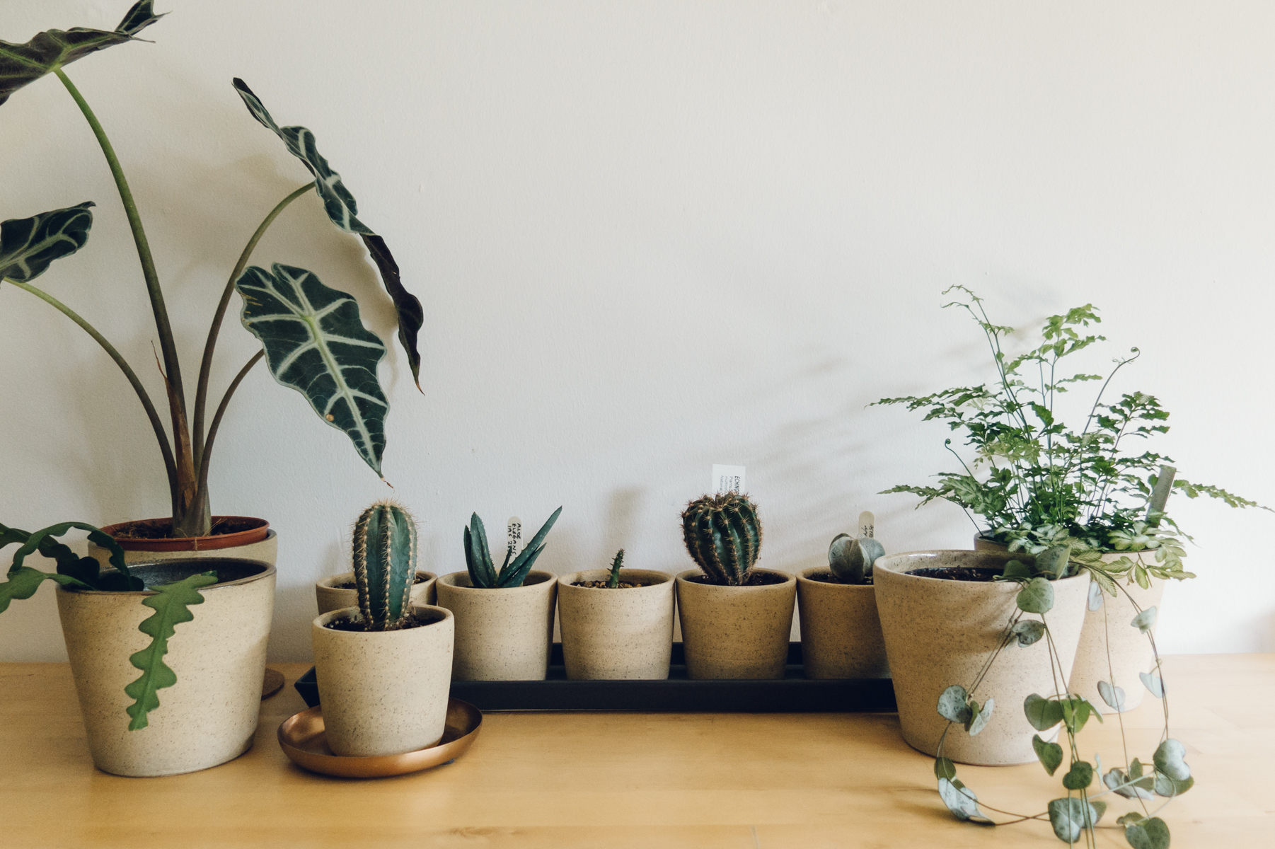 Ceramic pots with plants
