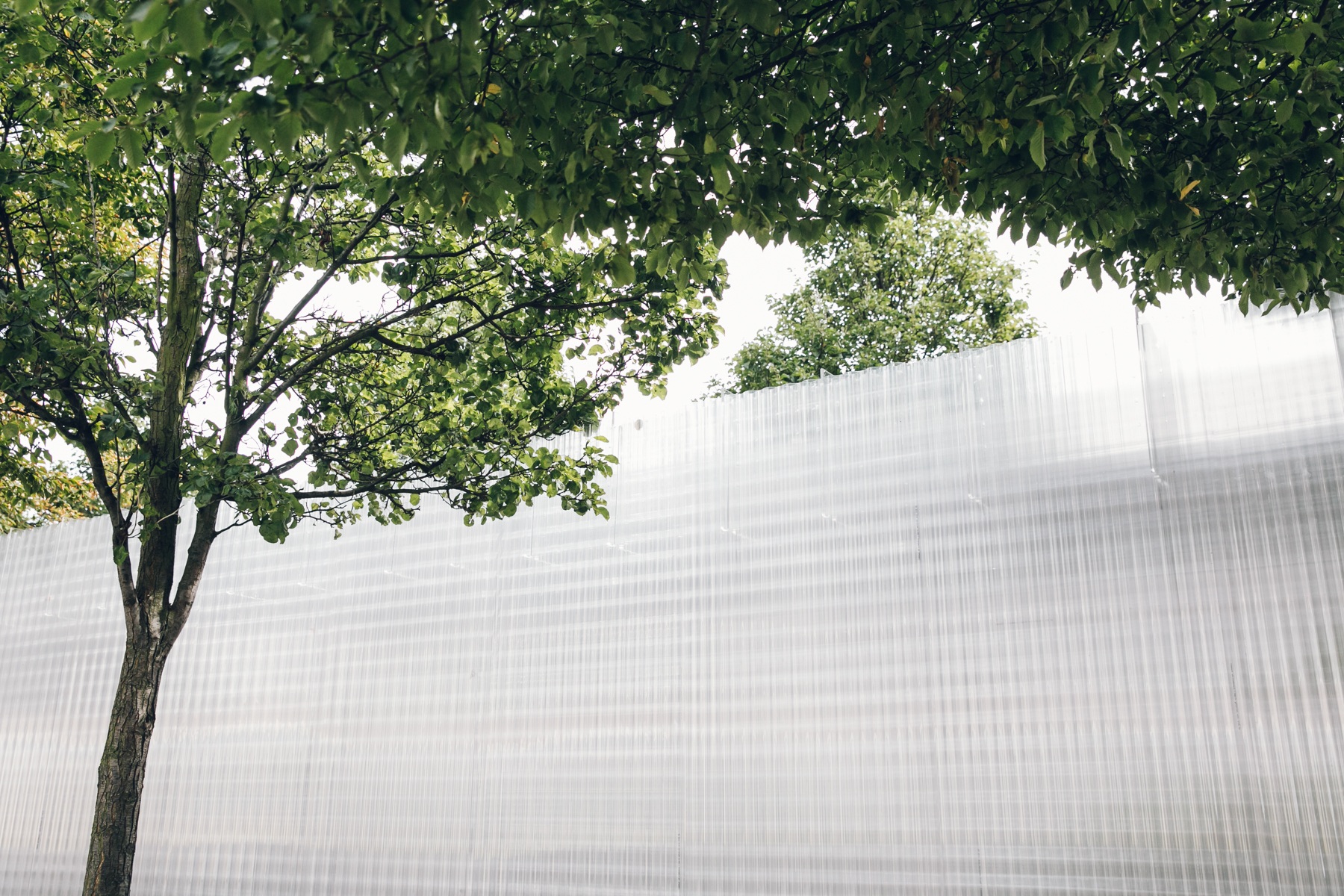 Corrugated Polycarbonate with trees.
