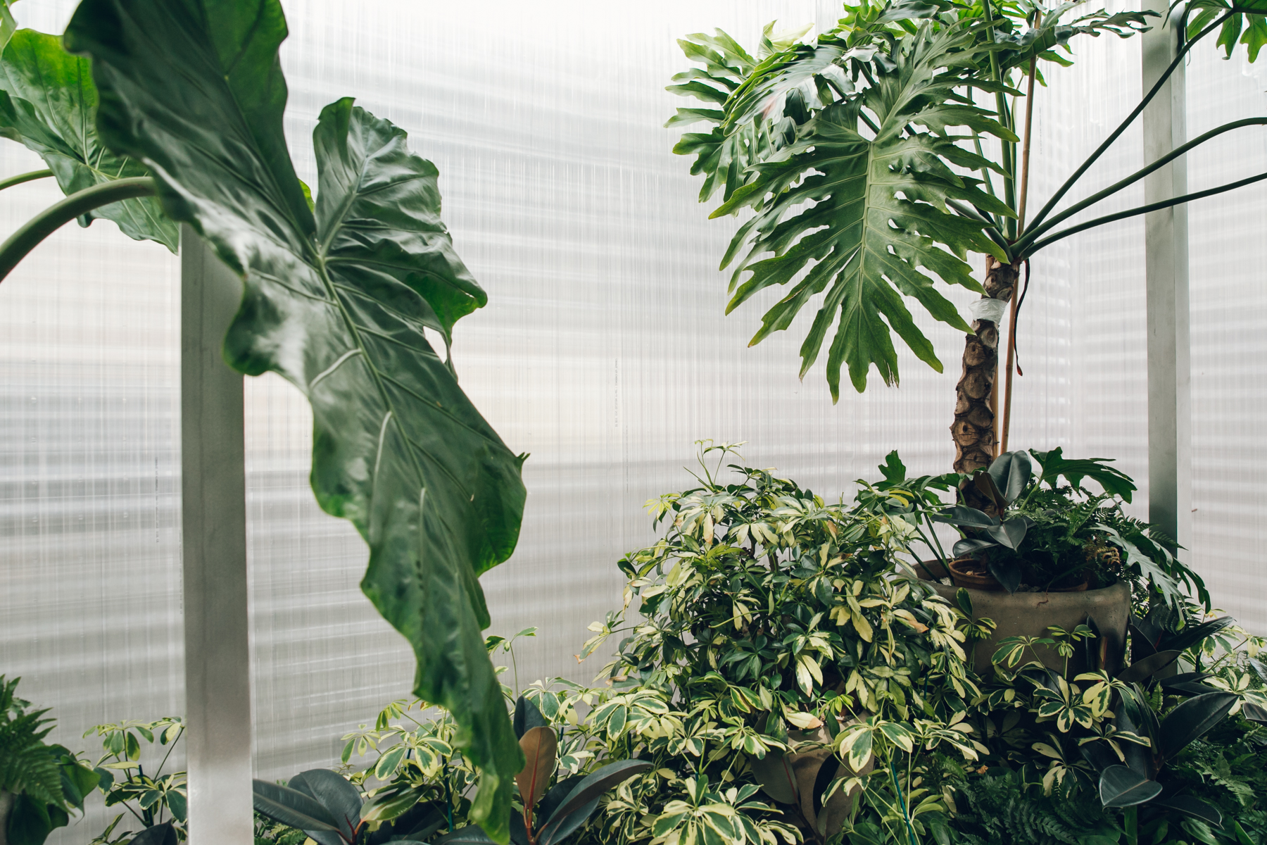 Houseplants inside the MINILiving Forests installation.
