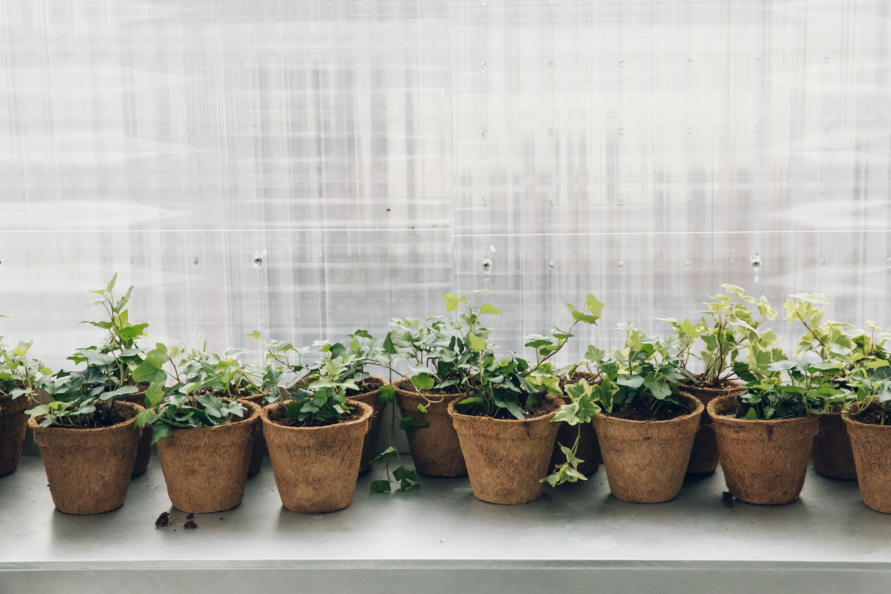 Plant pots in a row