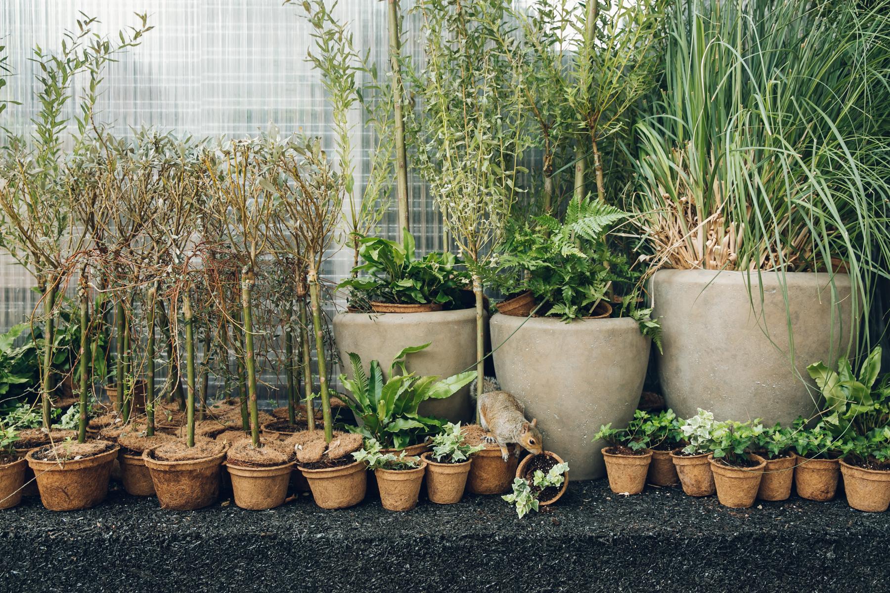 Squirrel amongst plant pots