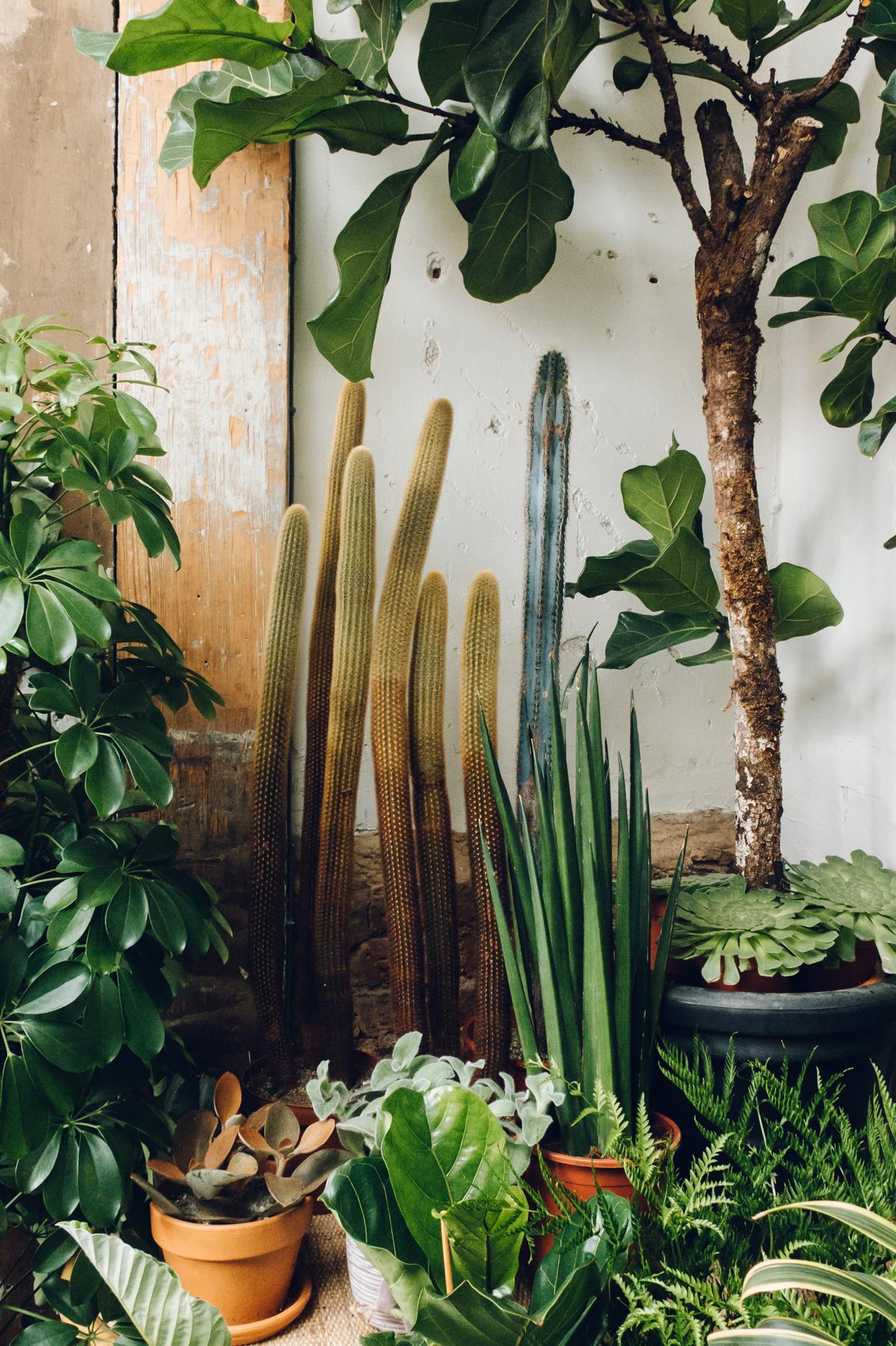 Cacti and plants in an indoor garden DREAM
