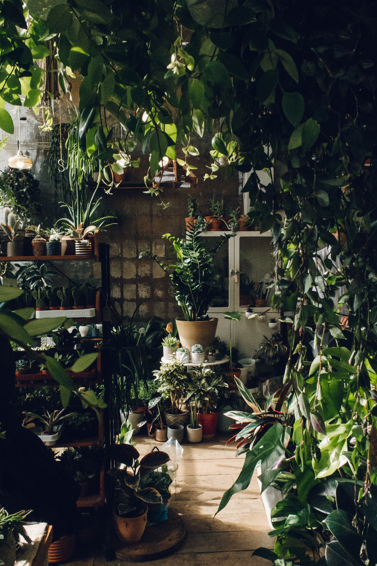 The indoor jungle at Conservatory Archives in London