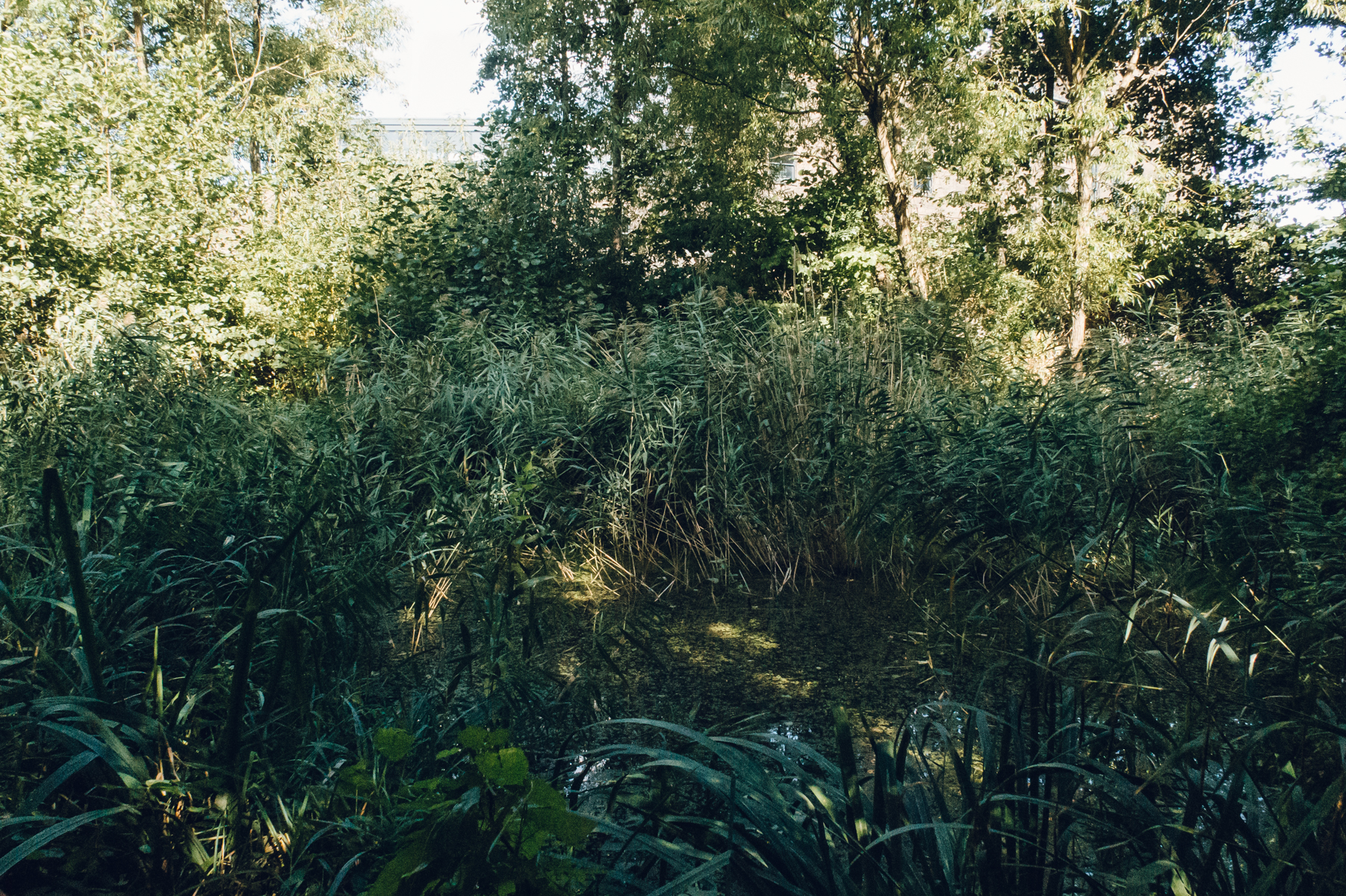 A leafy wild and overgrown garden in central London