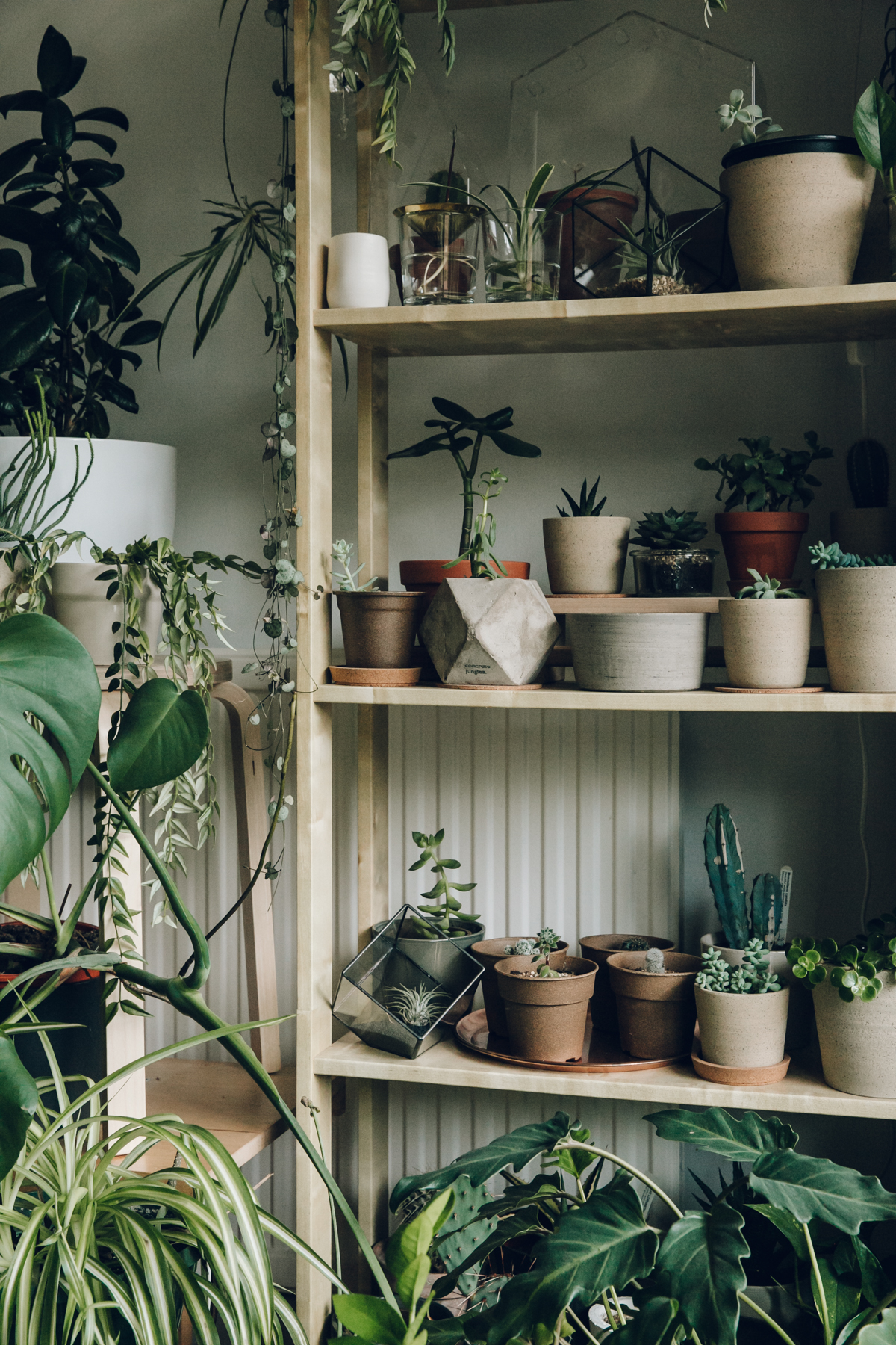 Indoor jungle and plant shelves.