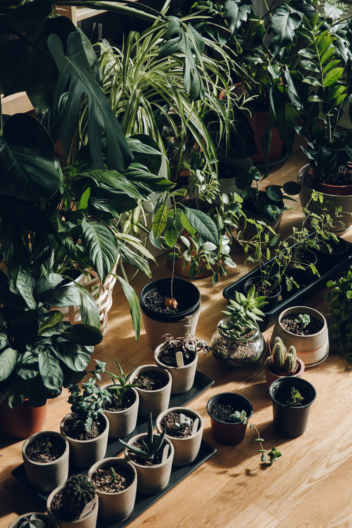 An indoor plant collection.