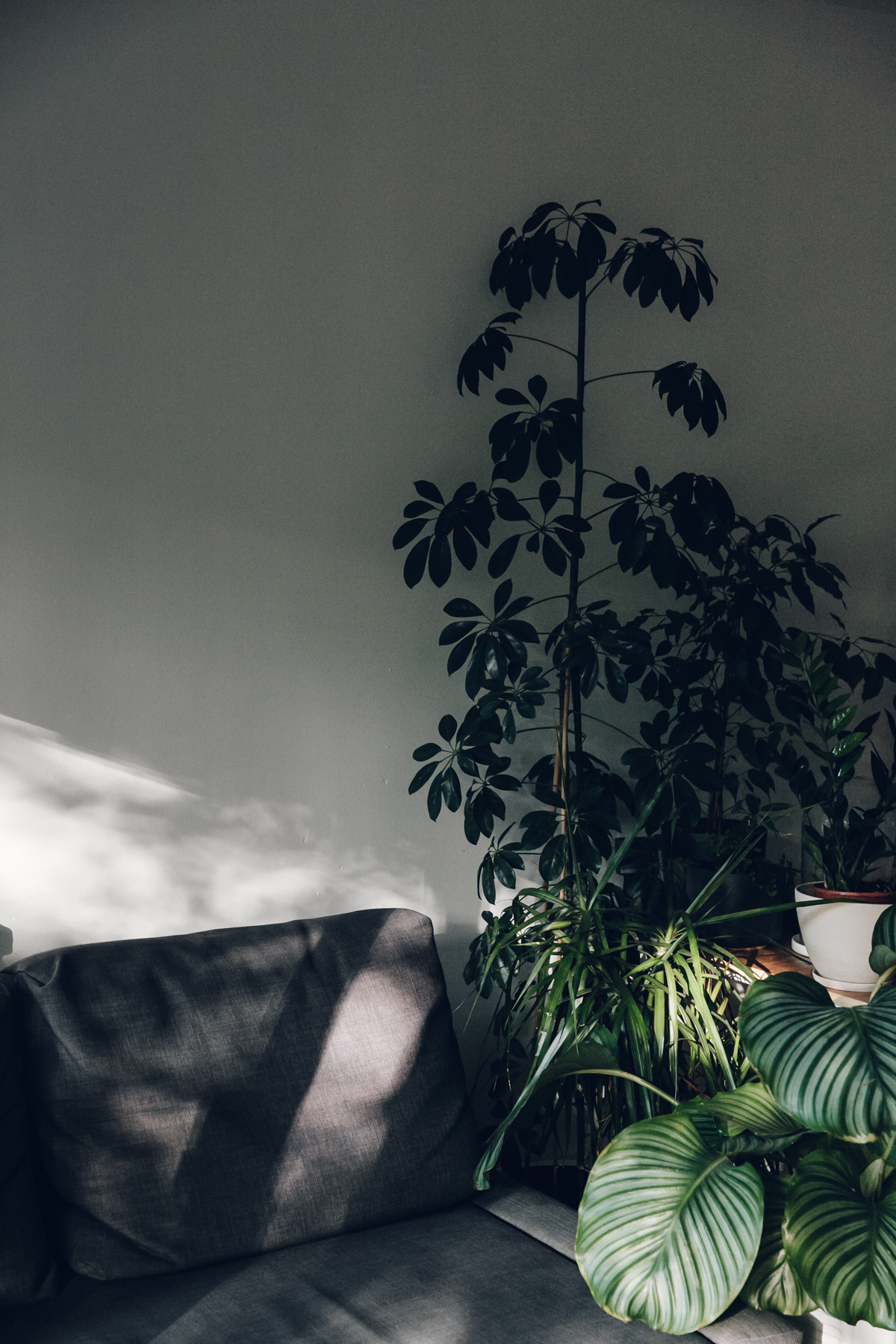 Gorgeous light and plants.