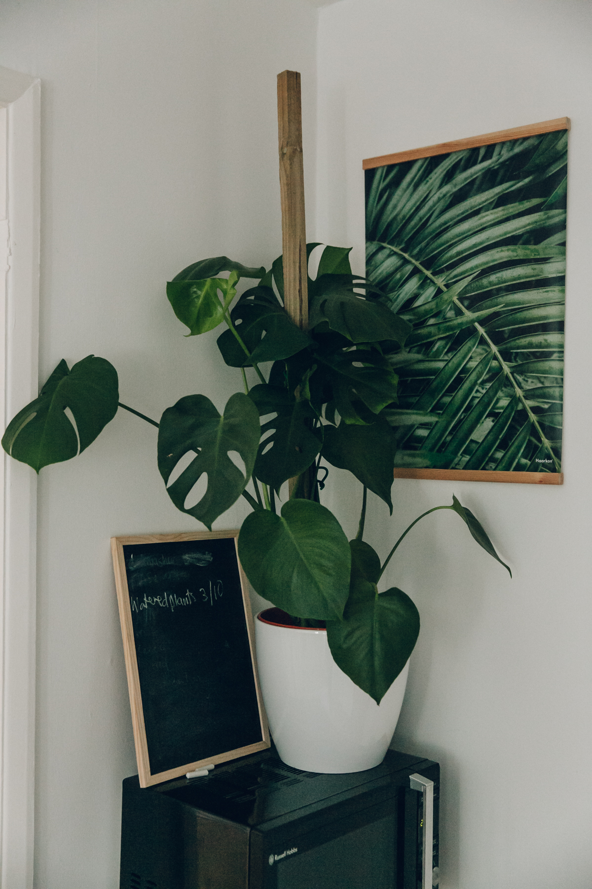 A green corner of our kitchen.