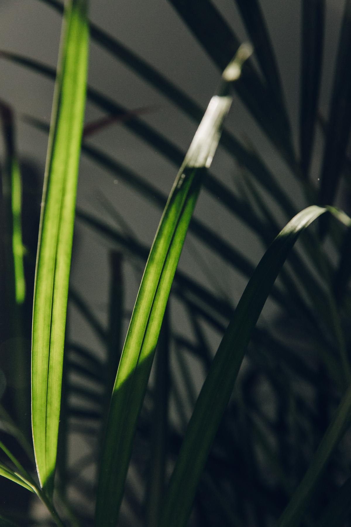 Sunlight through palm leaves.