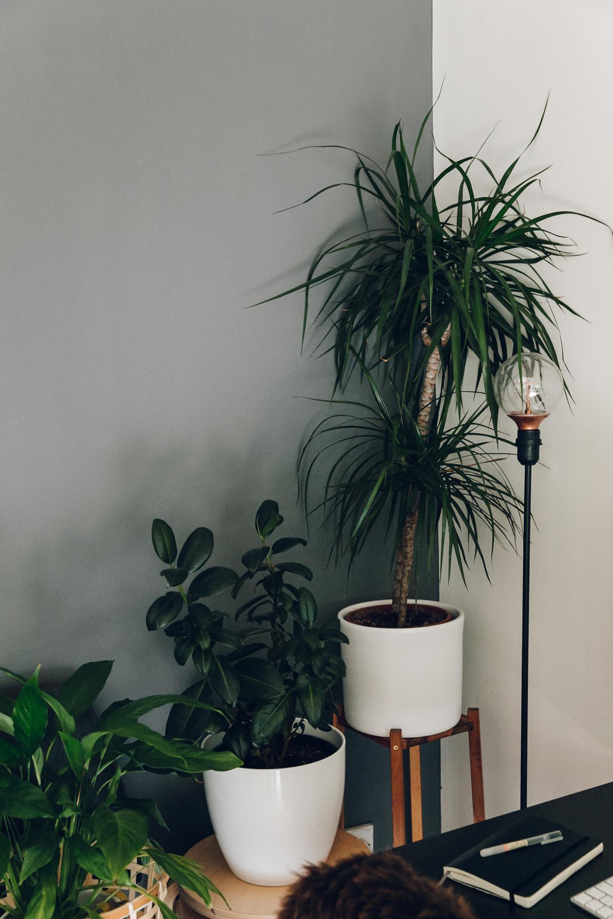 Indoor jungle.