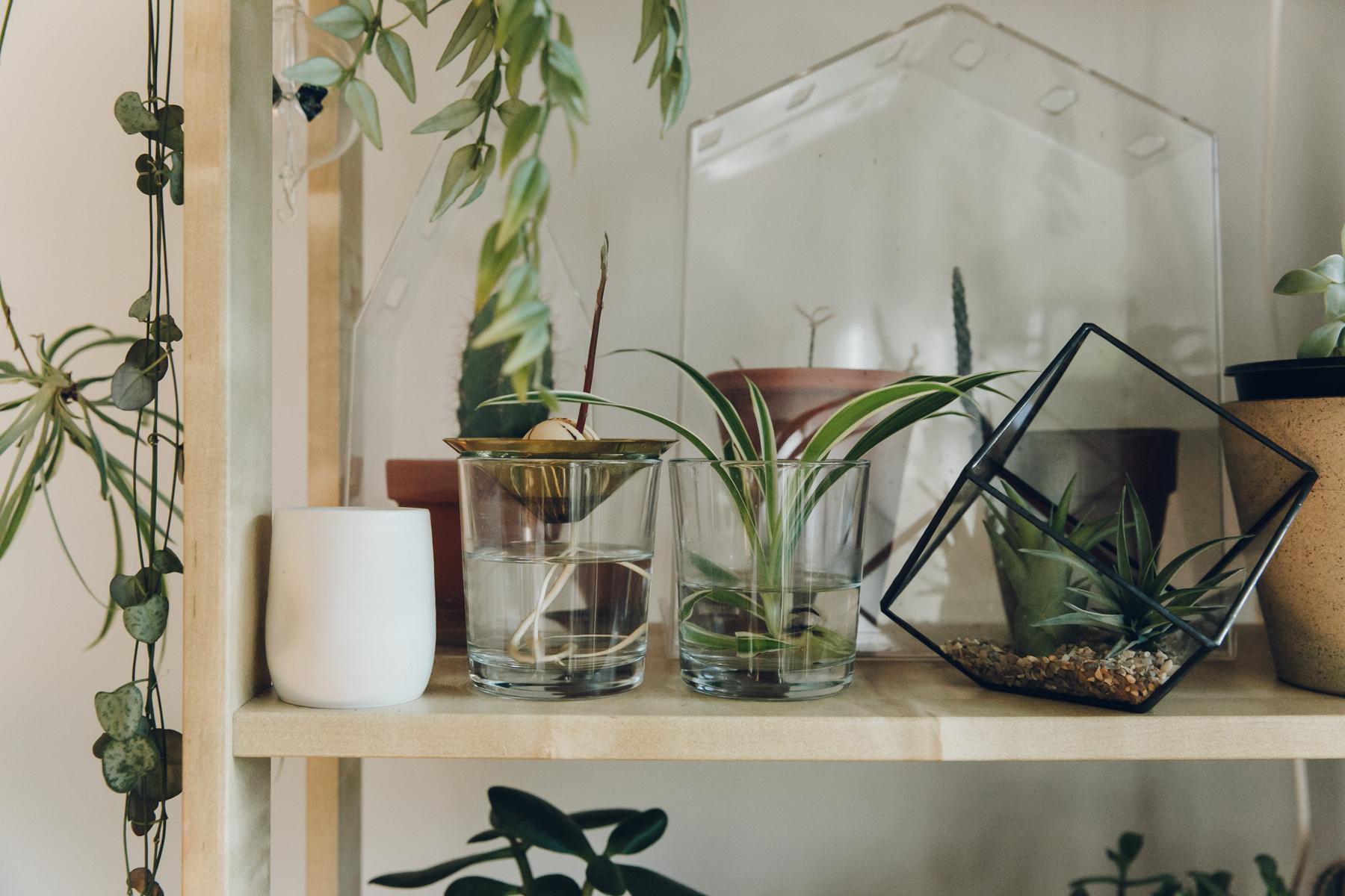 Glass terrarium from  Not Another Bill