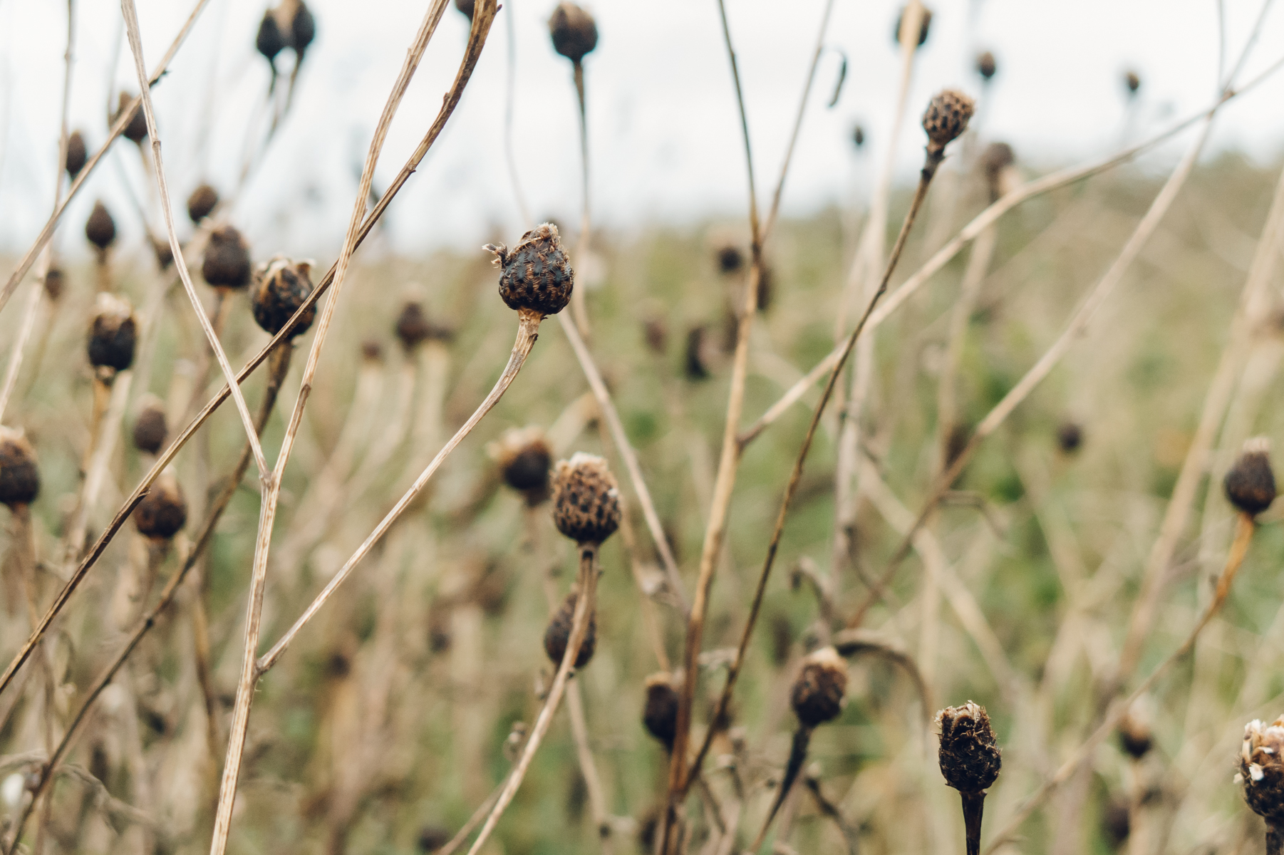 Seed heads and grasses.