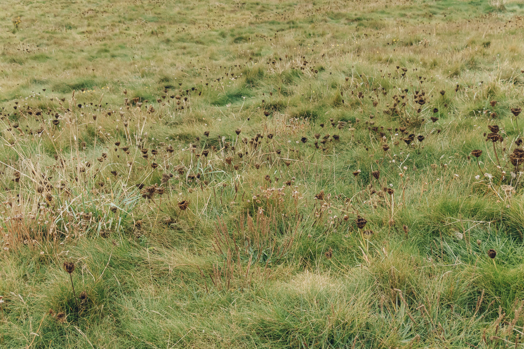 Grasses and seed heads.