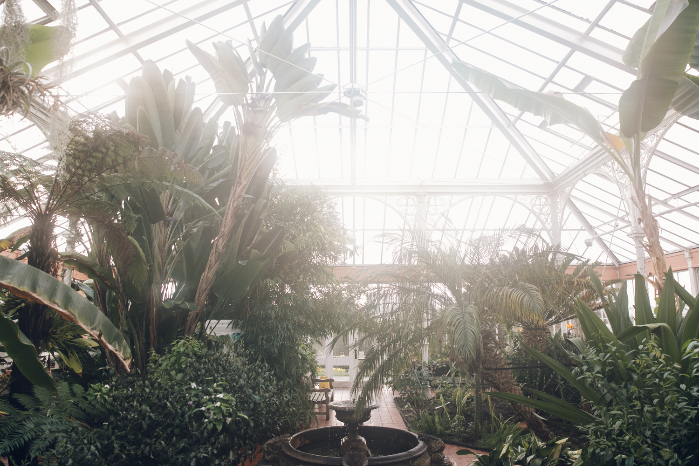 Inside the glasshouse at Birmingham Botanical Gardens.