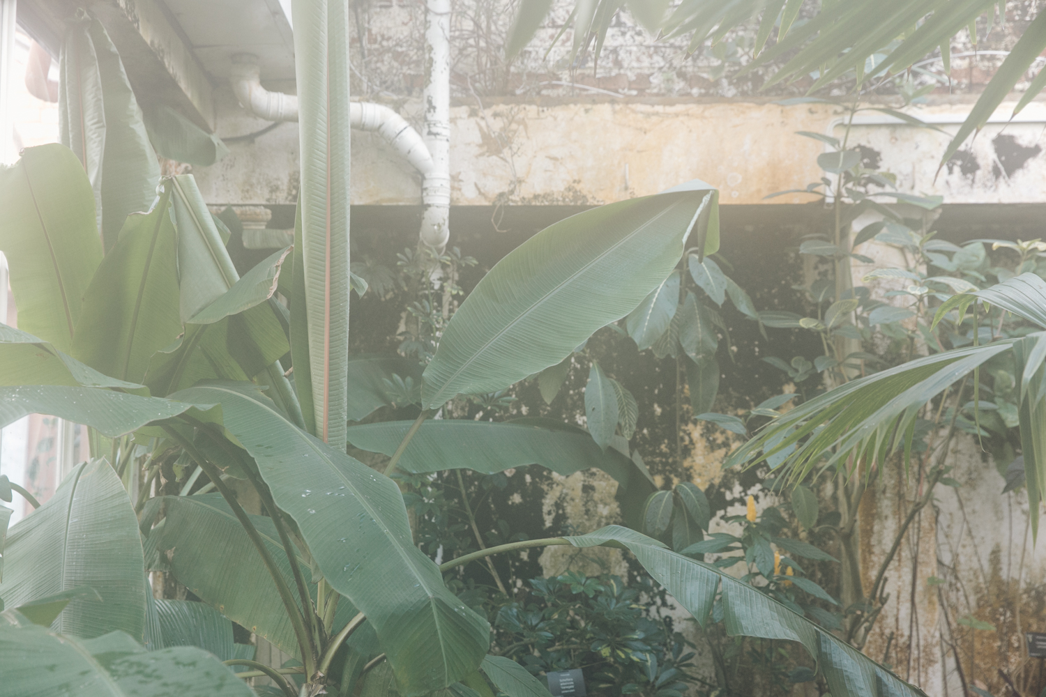 A steamy glasshouse full of plants.