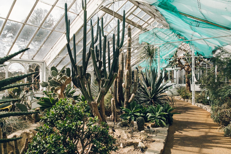 Cactus garden inside a glasshouse.