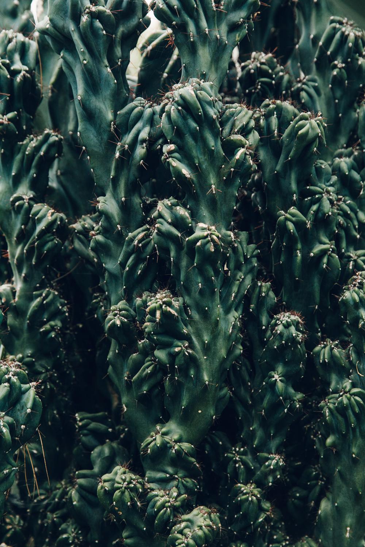 Cactus close-up.