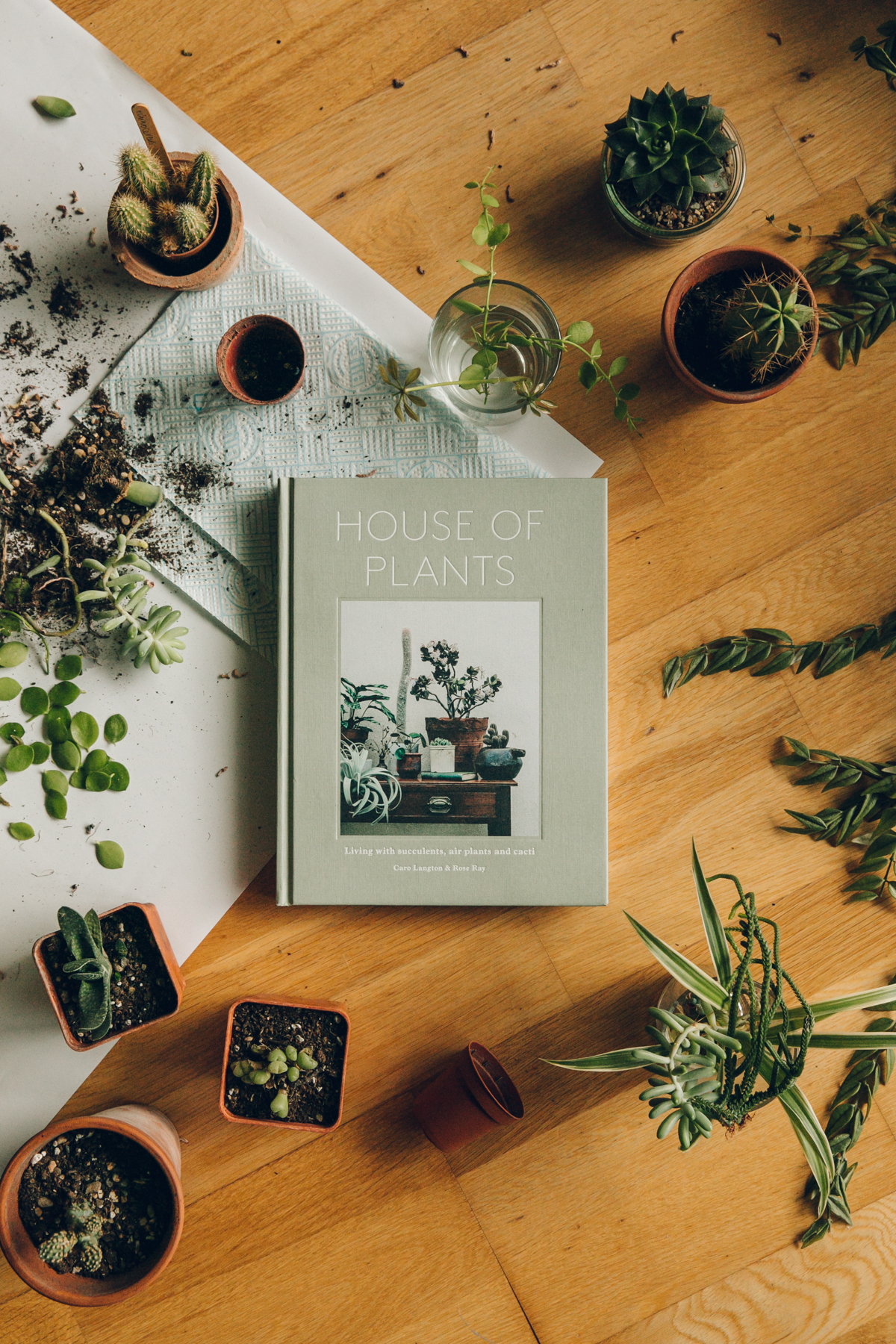 House of Plants: Living with Succulents, Air Plants and Cacti book.