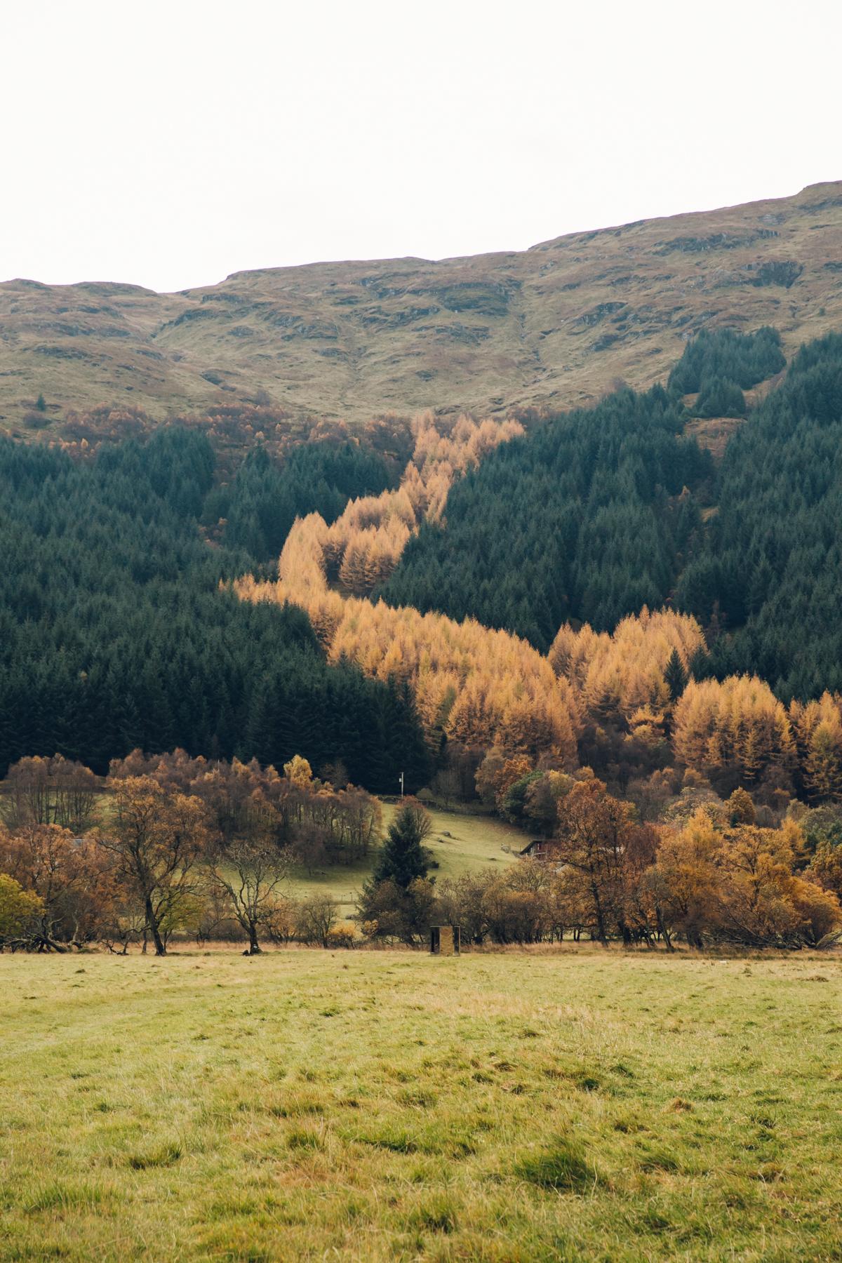 Incredible Autumn colours of Scotland - near Loch Lomond.