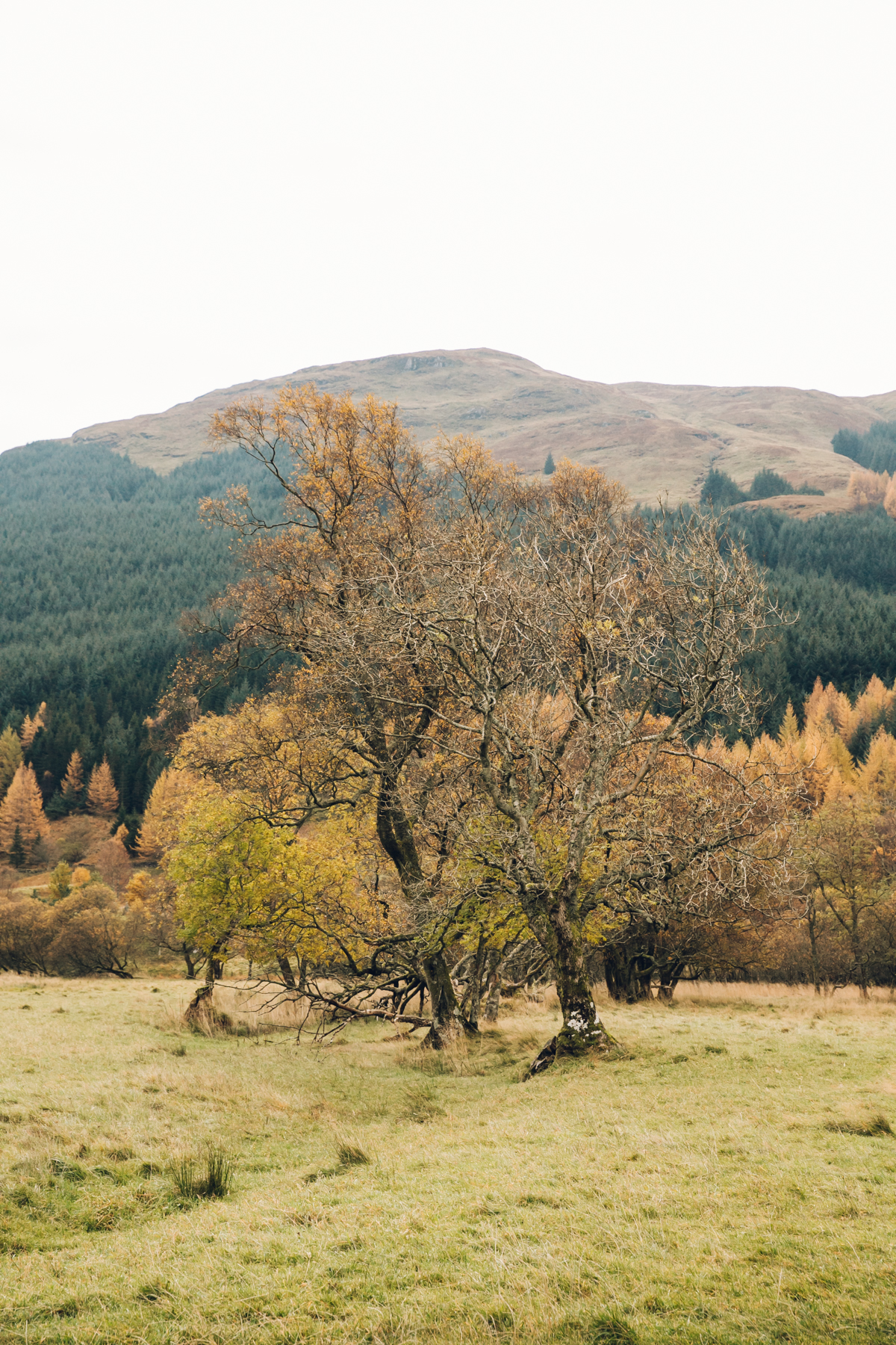 Autumnal trees in Scotland.