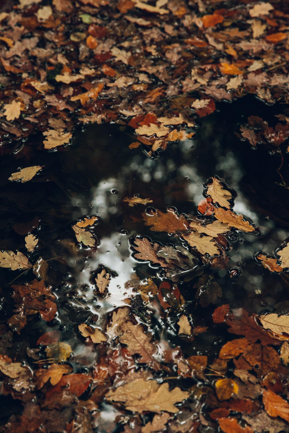 Finnich Glen in Scotland in the Autumn.