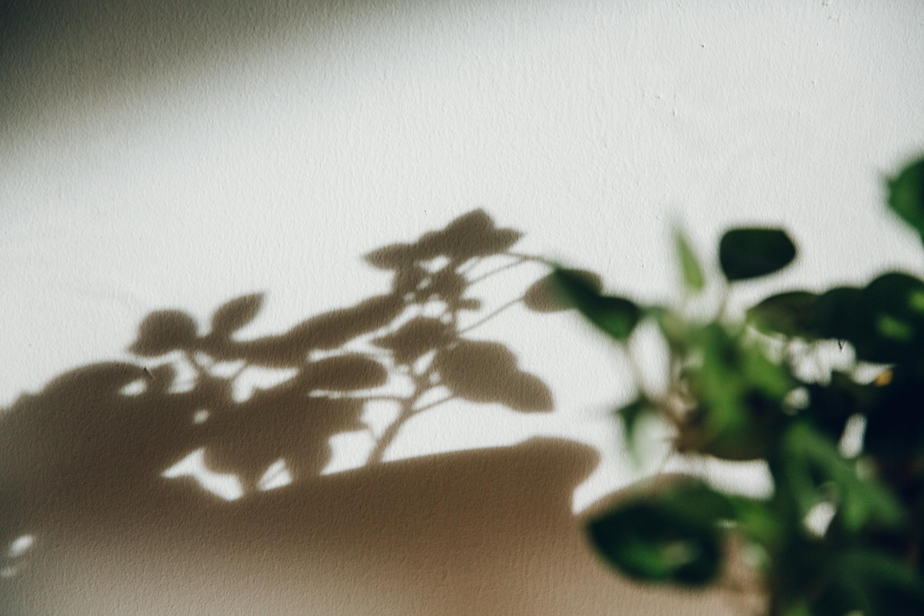 Plant shadows.