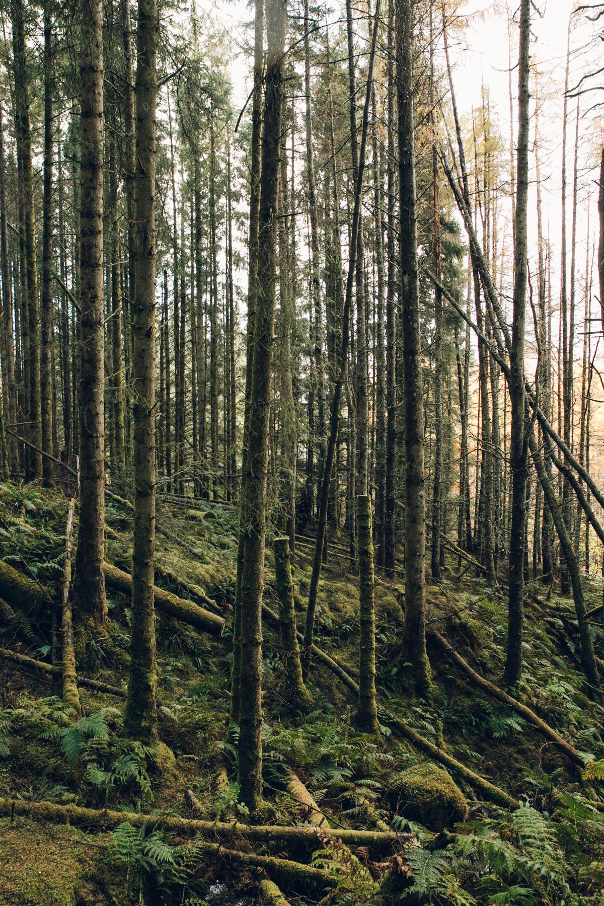 Deep green woodland on the Isle of Skye.
