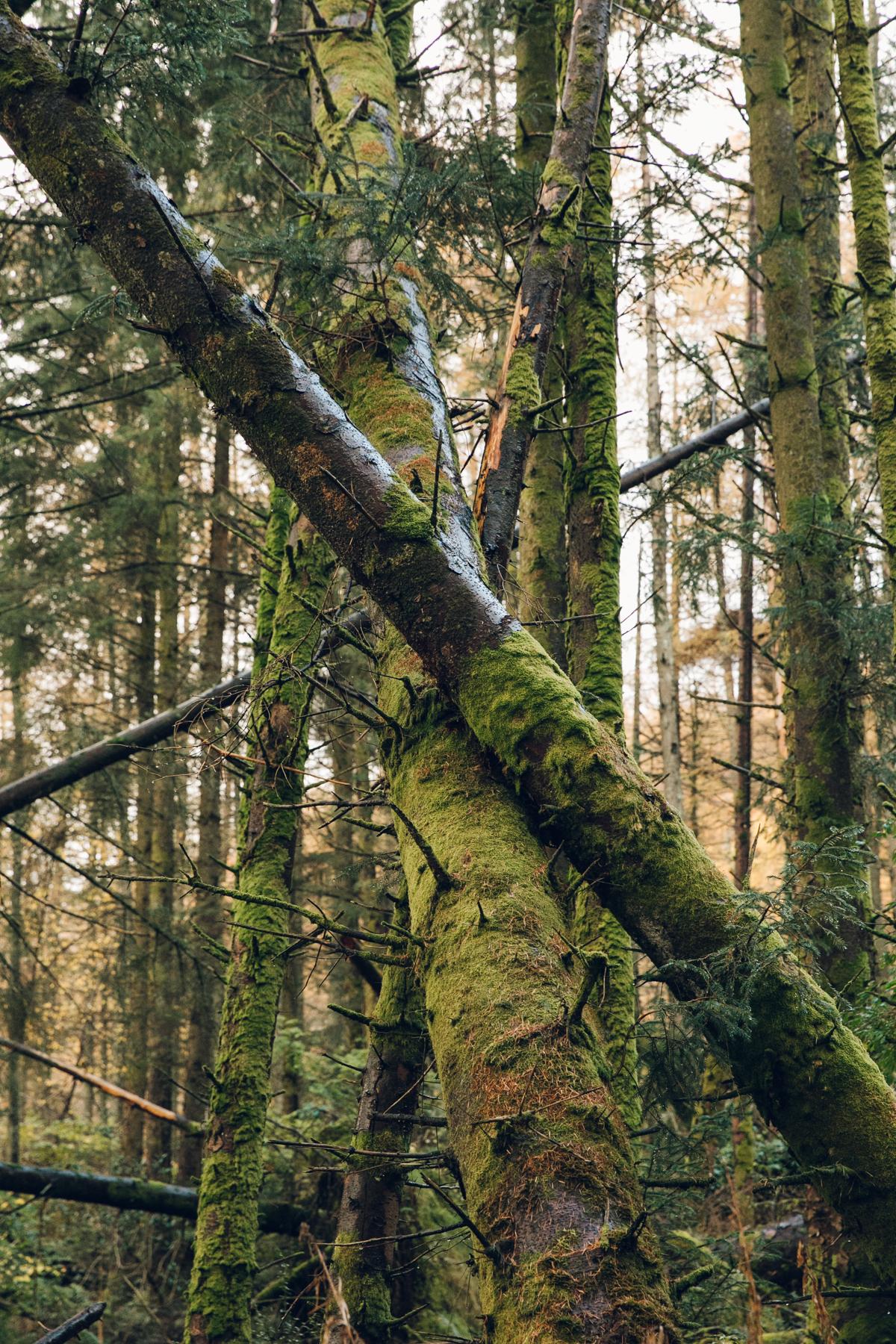 Fallen trees in the woods.