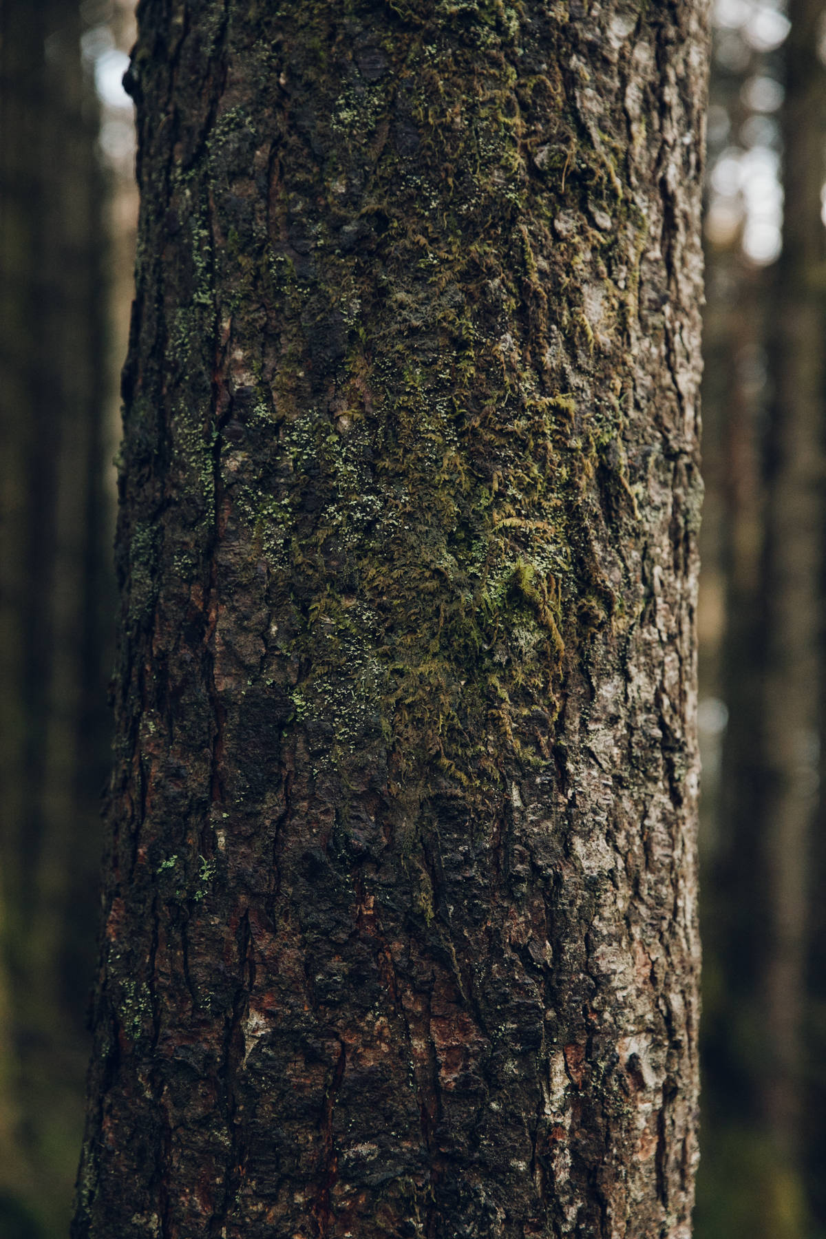 Tree textures in the woods.