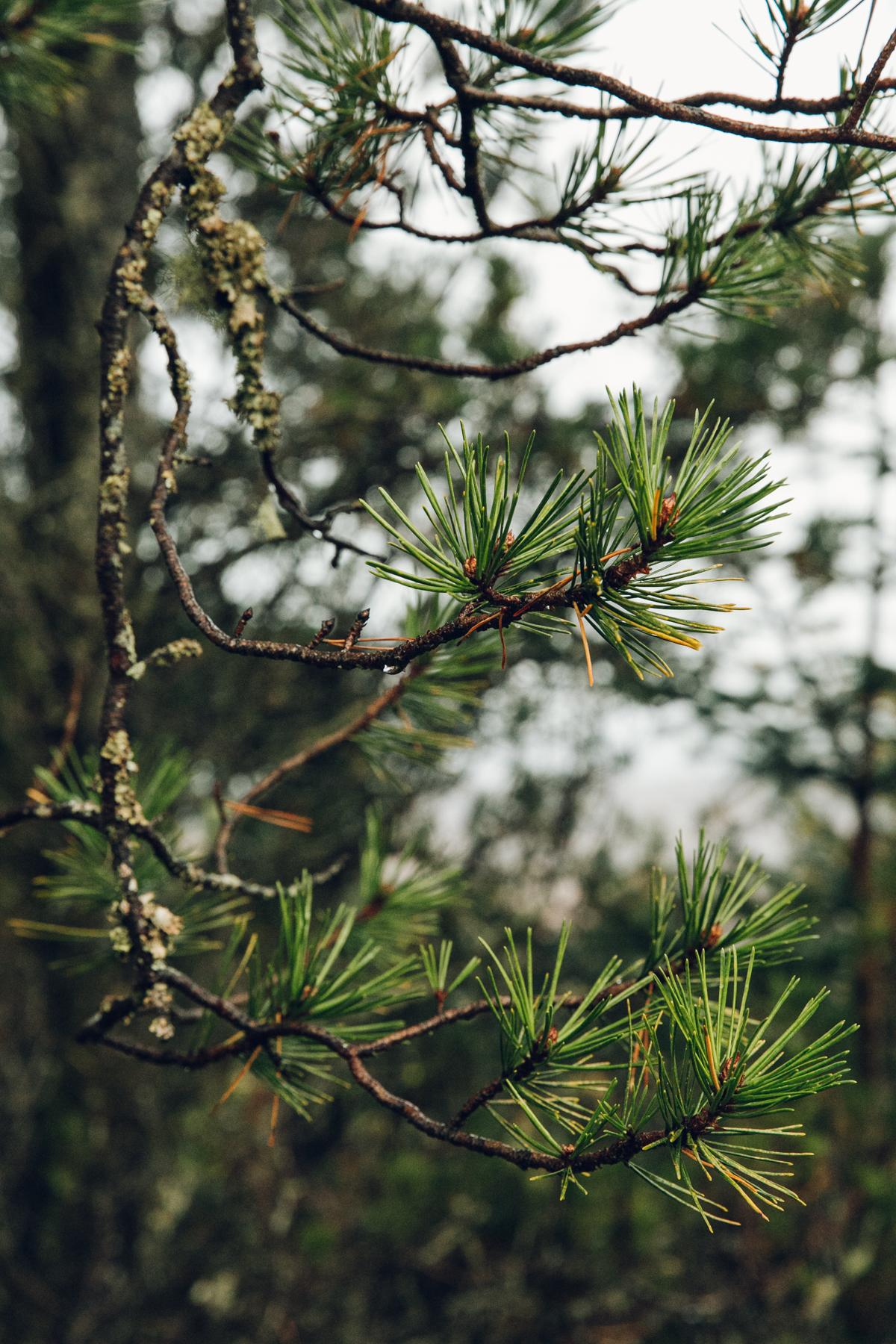 Woodland textures.