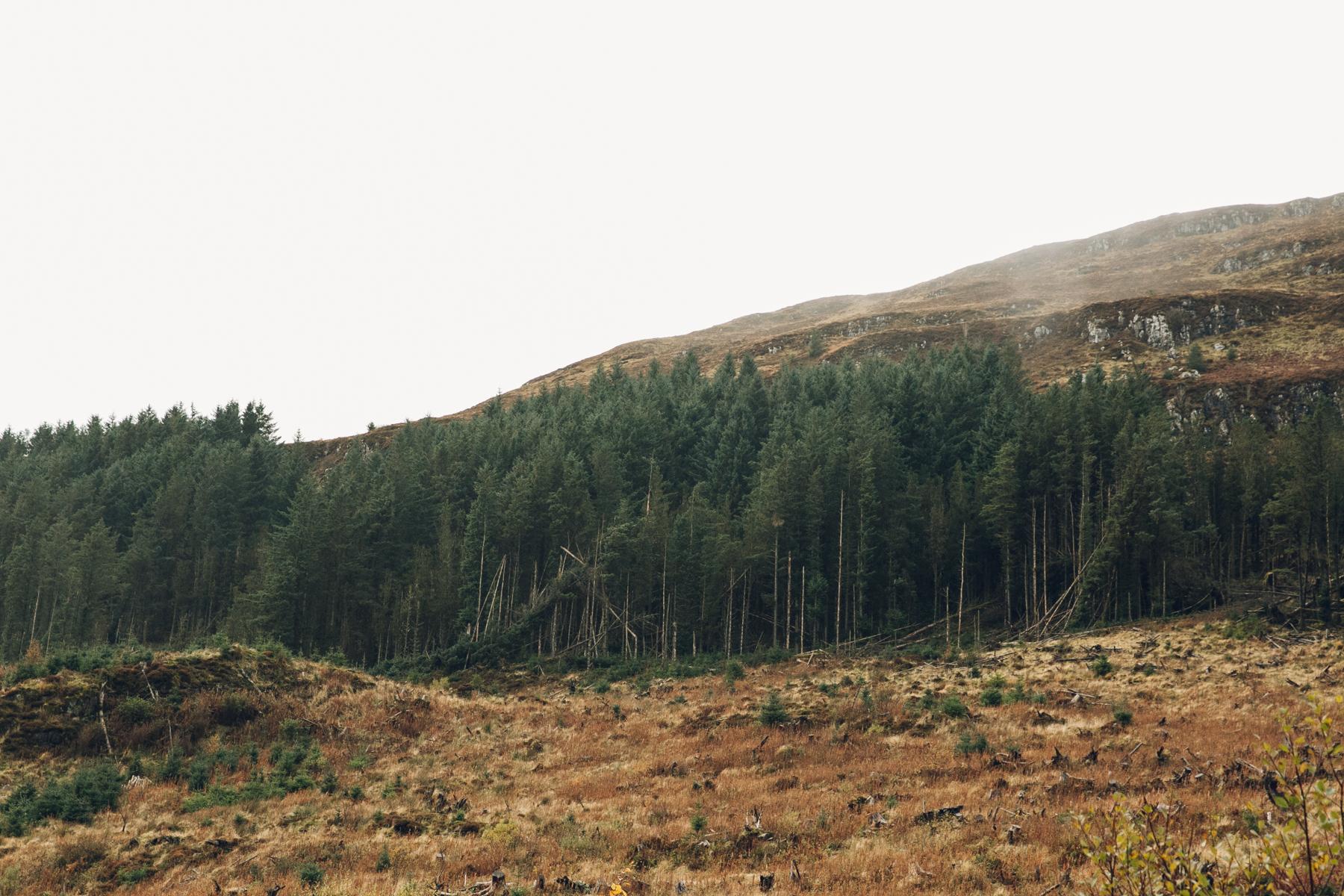 Woodland on the Isle of Skye.