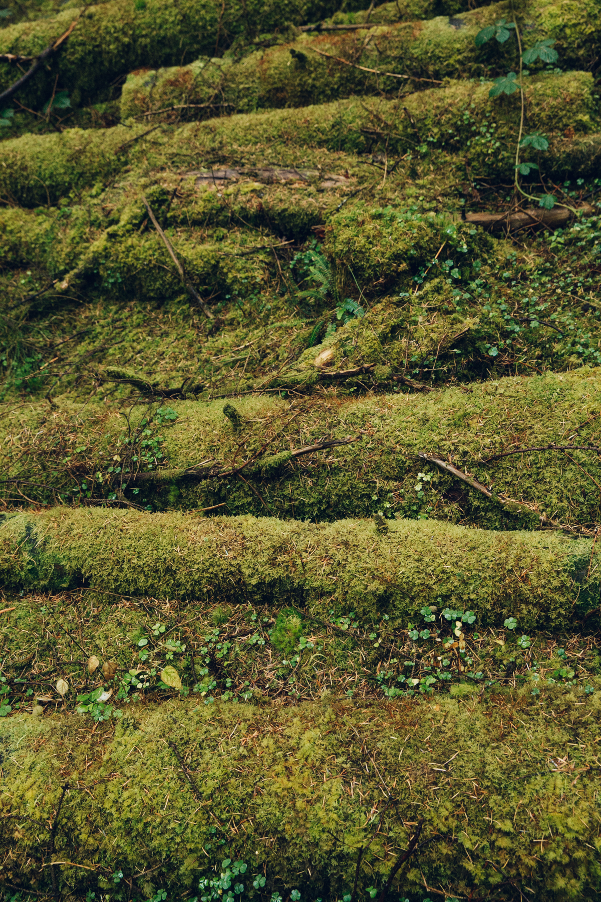 Green mossy woodland textures.