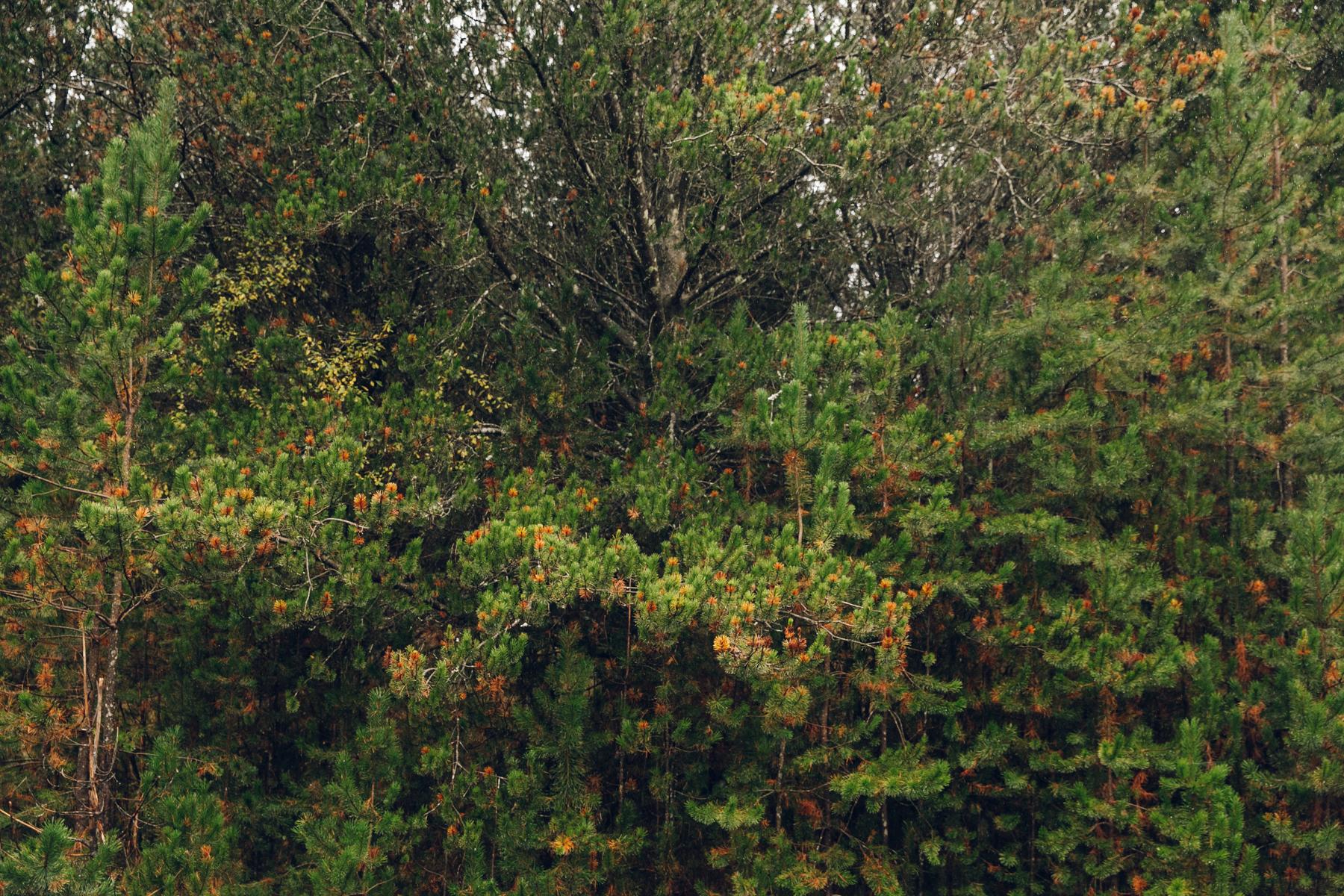 Green woodland textures.