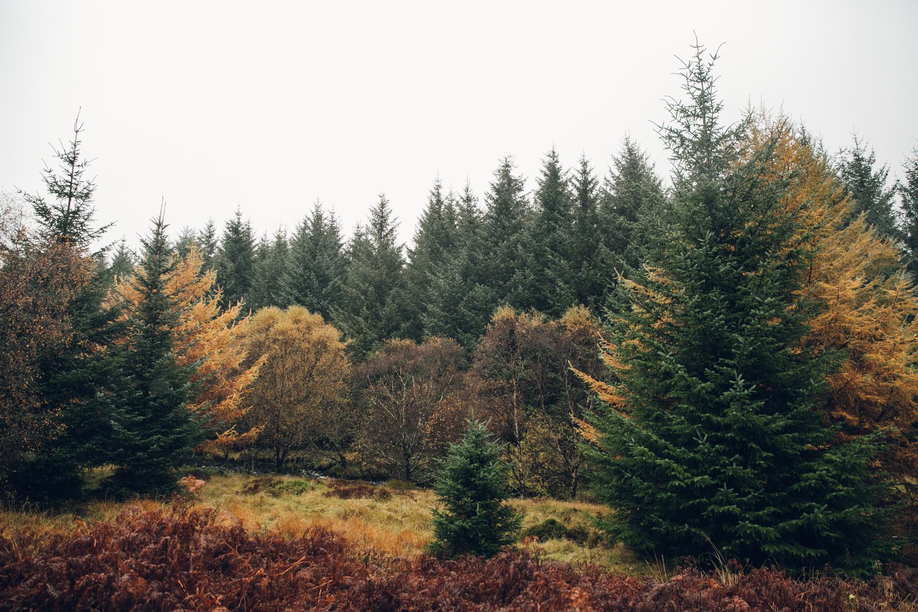 Autumnal colours of Scotland.