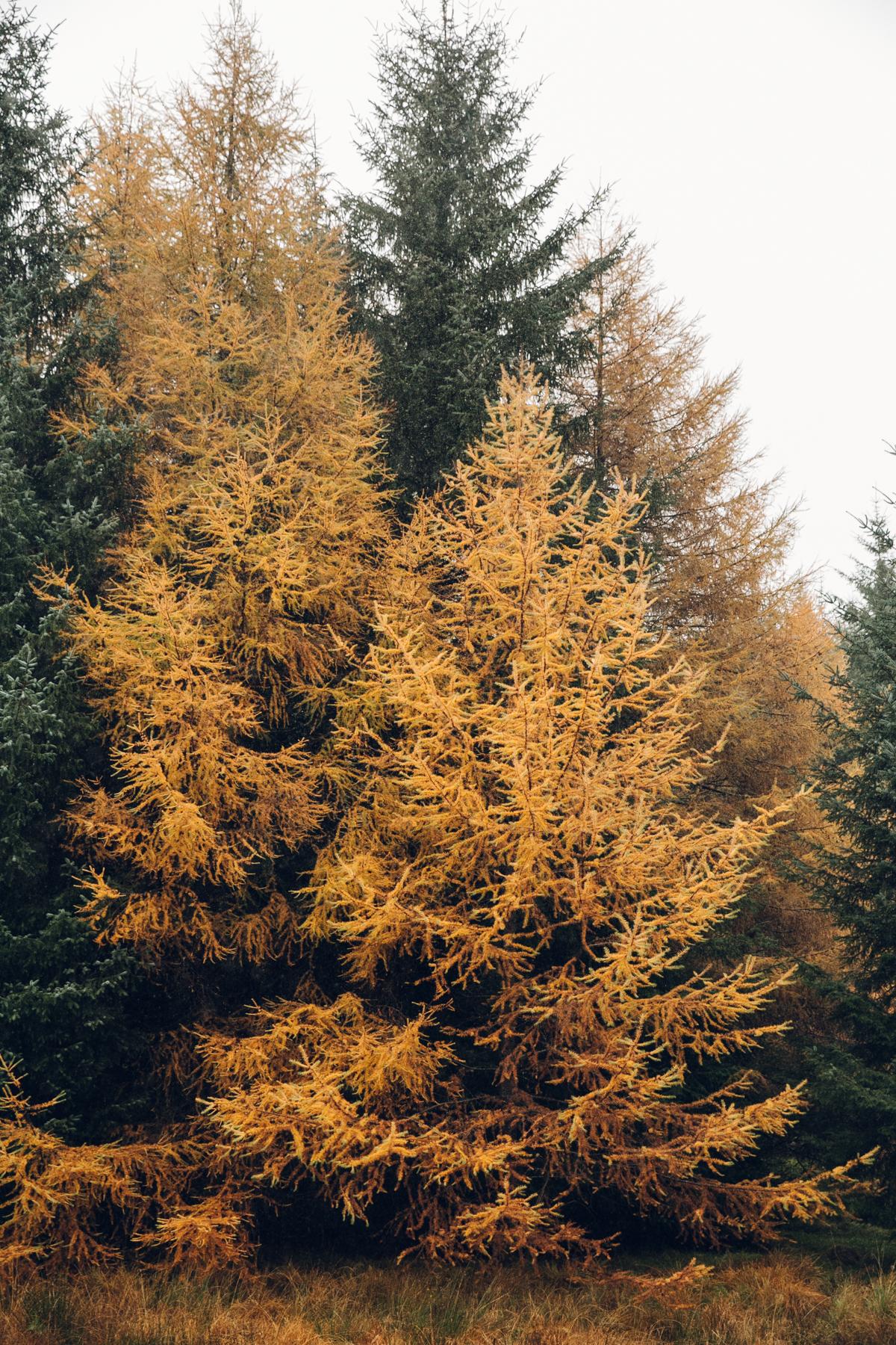 Bright Autumn colours in Scotland.