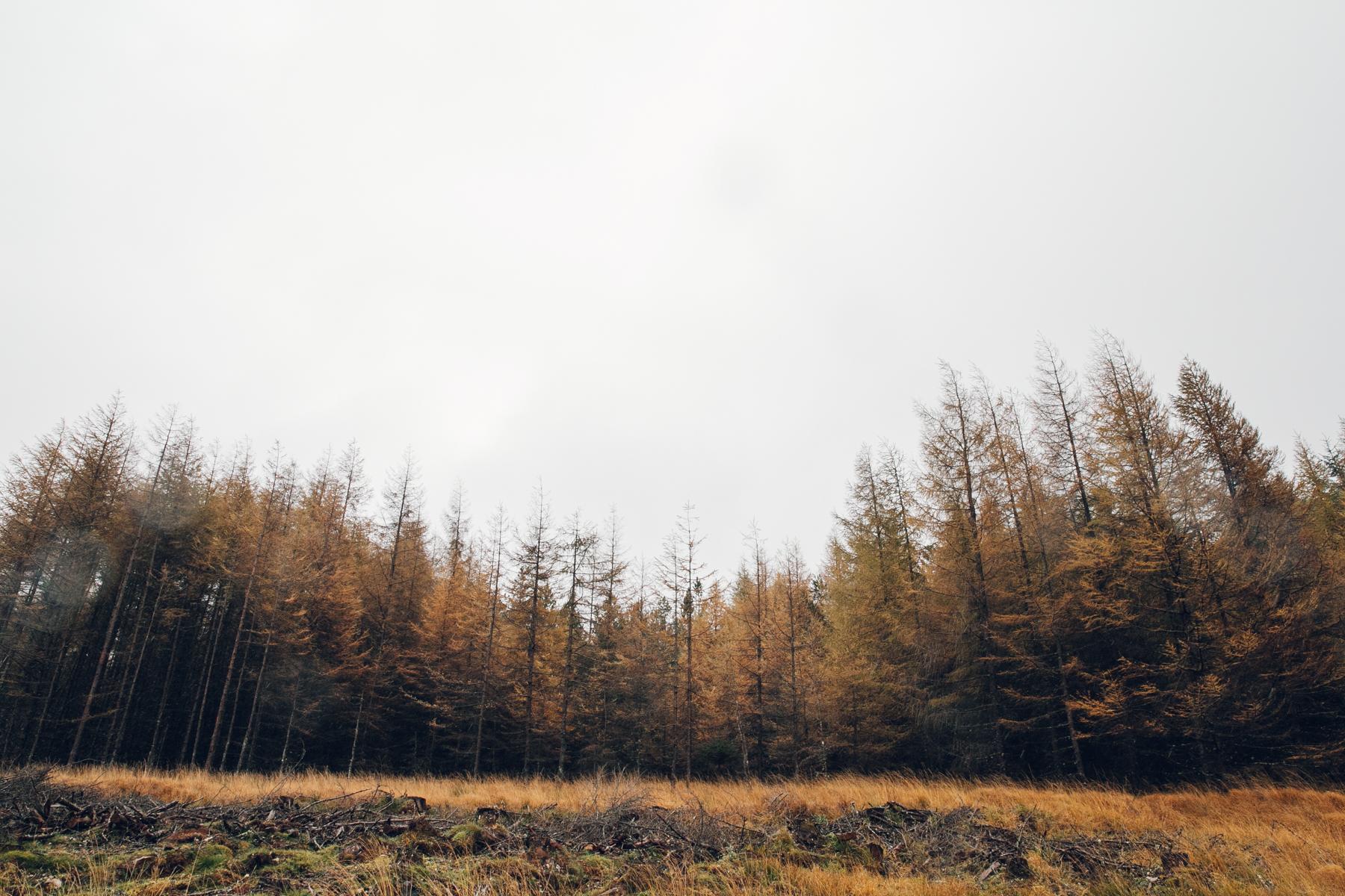 Autumn colours in Scotland.