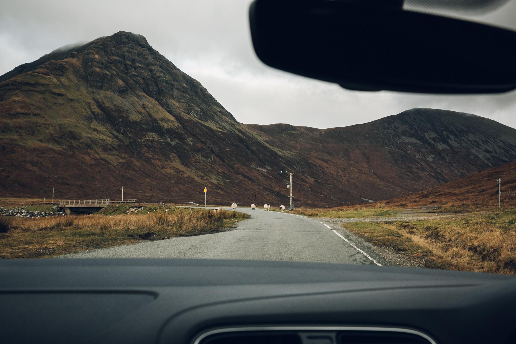 Sheep-shaped traffic jams on the Isle of Skye.