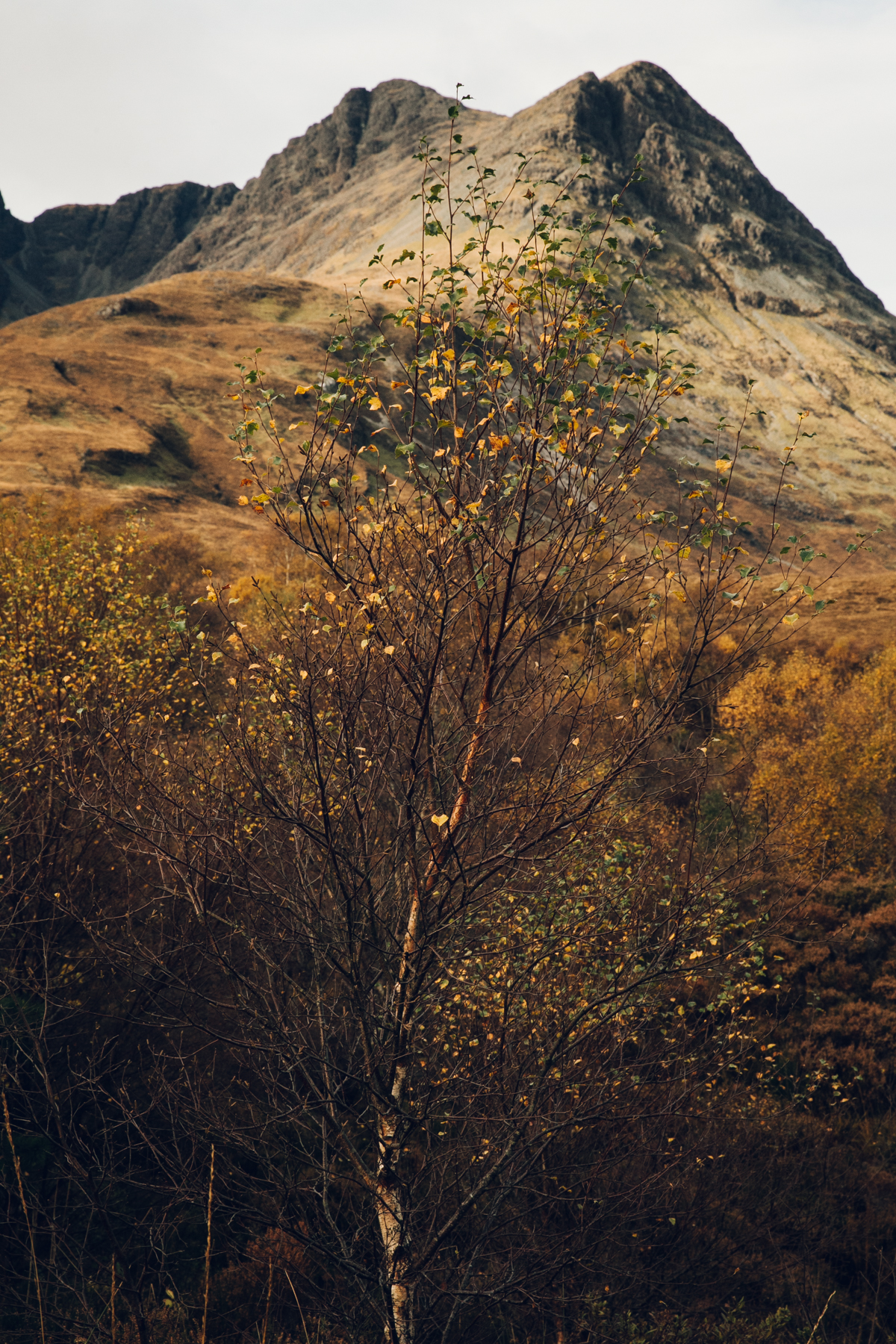 Autumn colours in the mountains.
