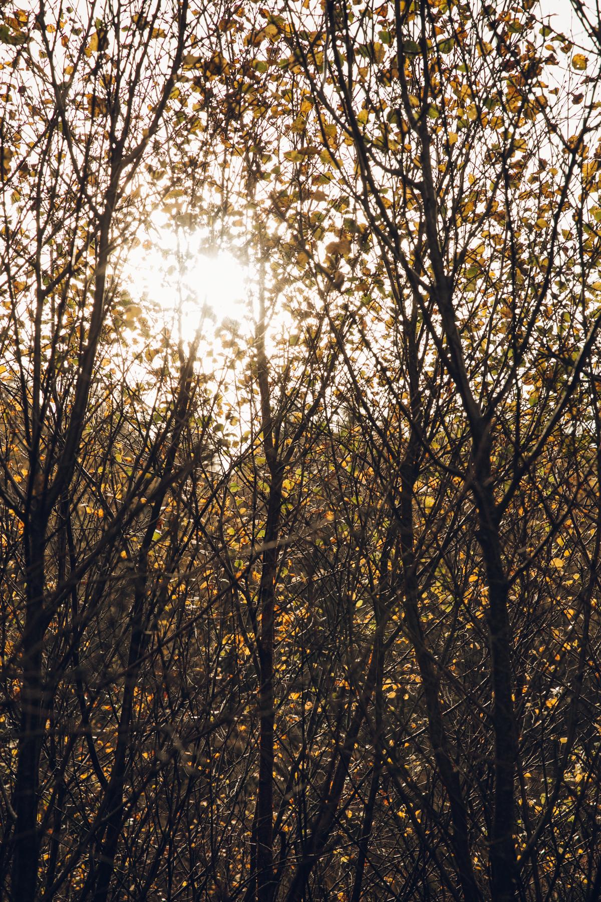 Autumn sunlight through the trees.