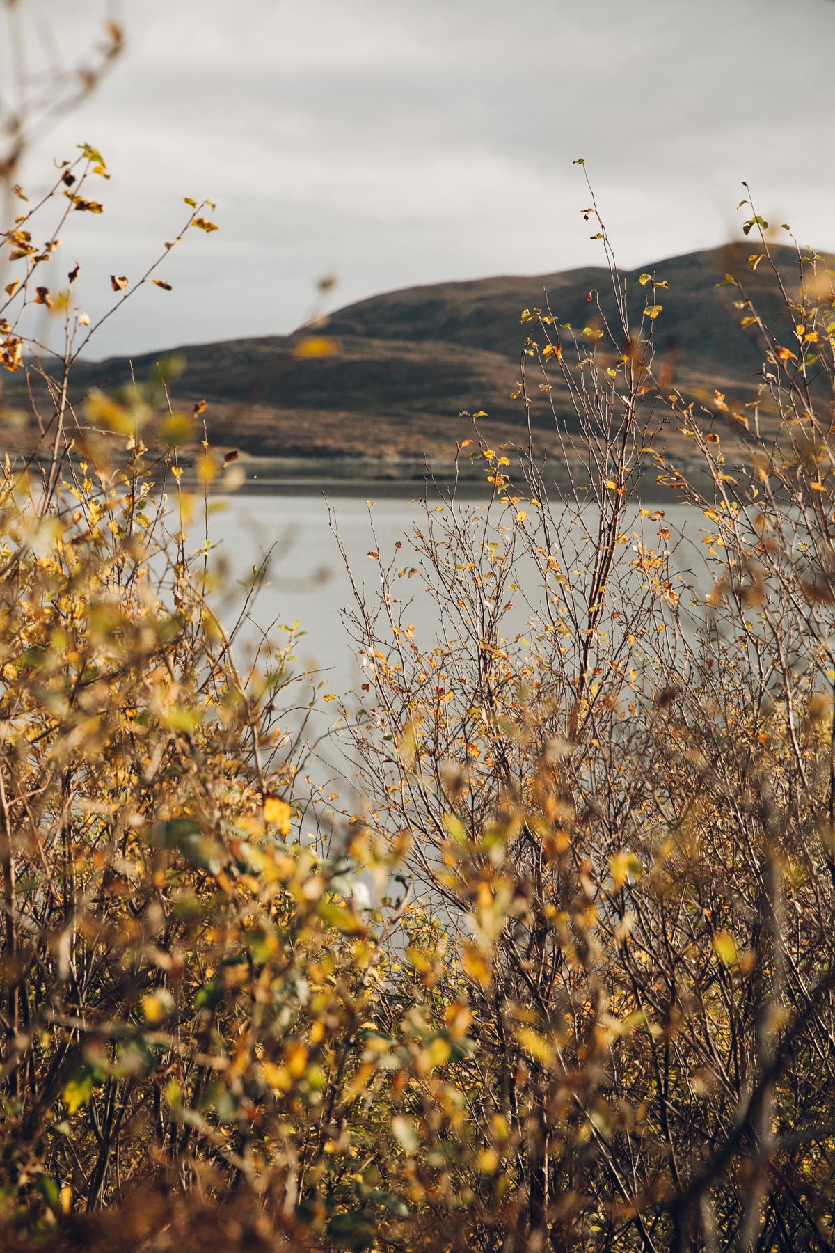 Autumn colour in Scotland.