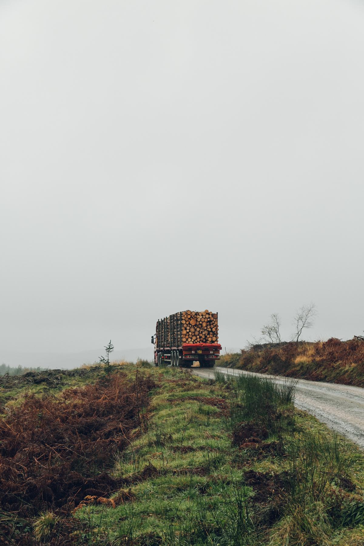 Lorry full of felled trees.
