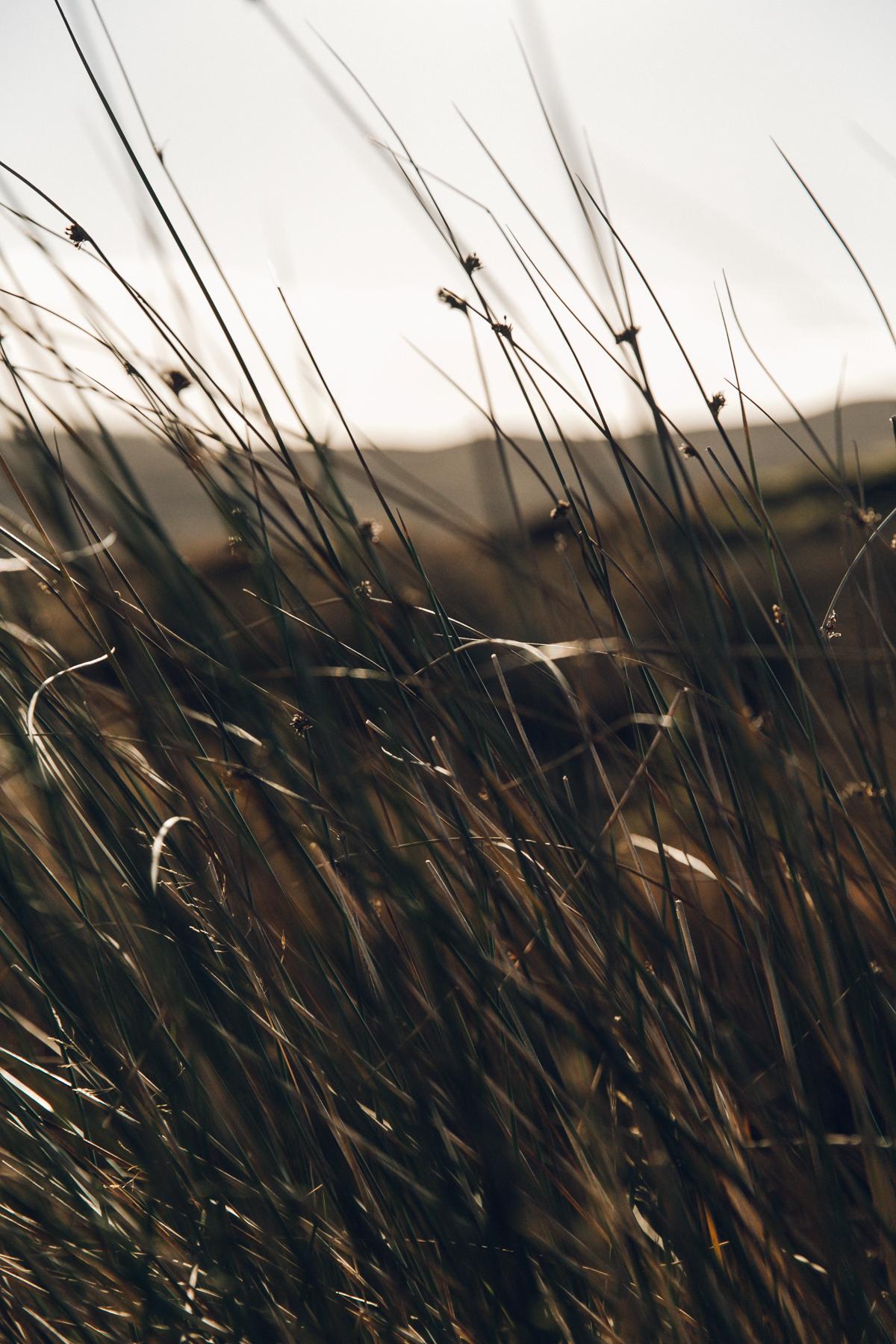 Sunlight through the grass.