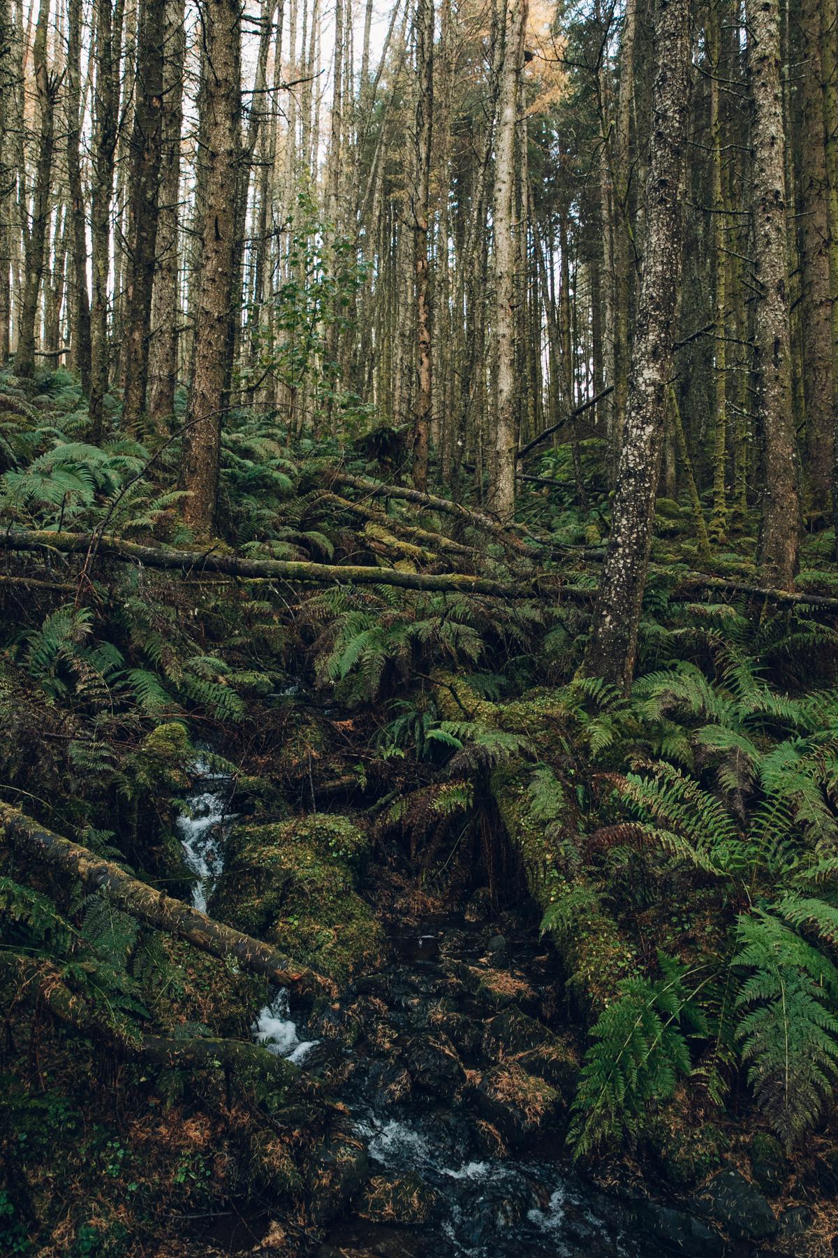 A trickling stream running through the woods.