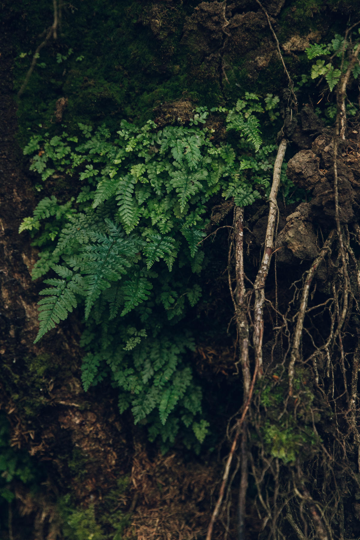 Ferns and bracken planted in the tree roots.