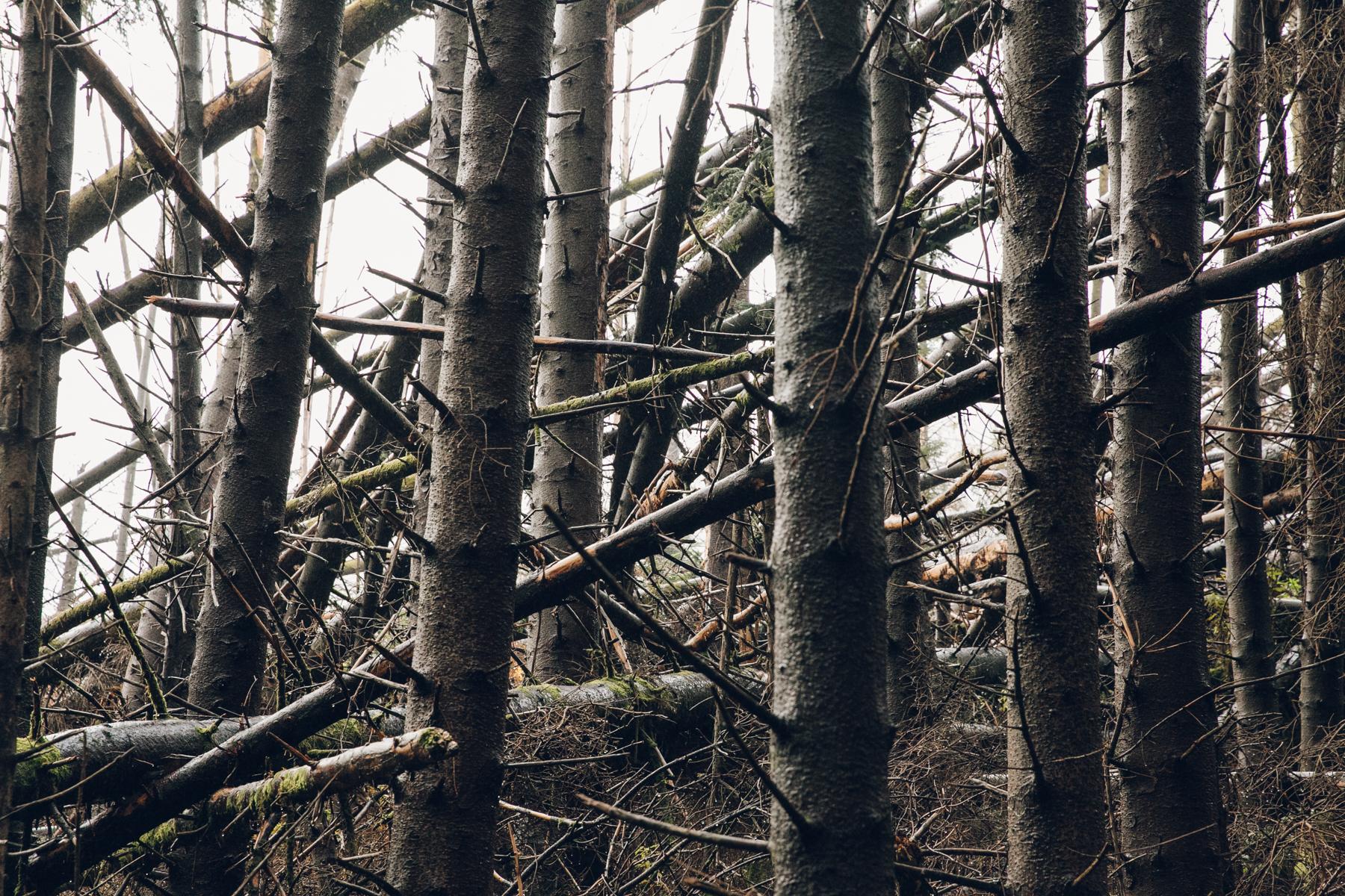 Pattern made by fallen trees.
