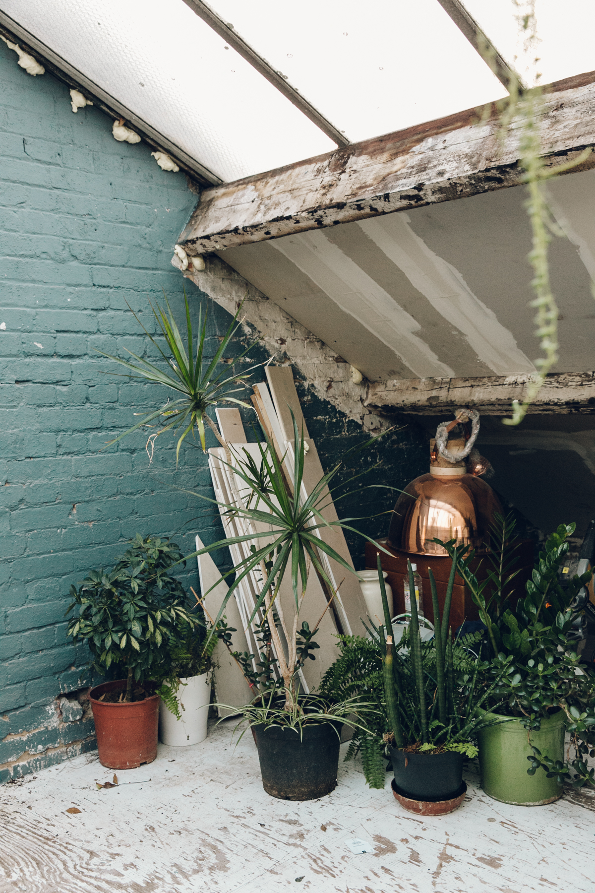 The plant rehab centre (aka light-filled attic space) at Clapton Tram.