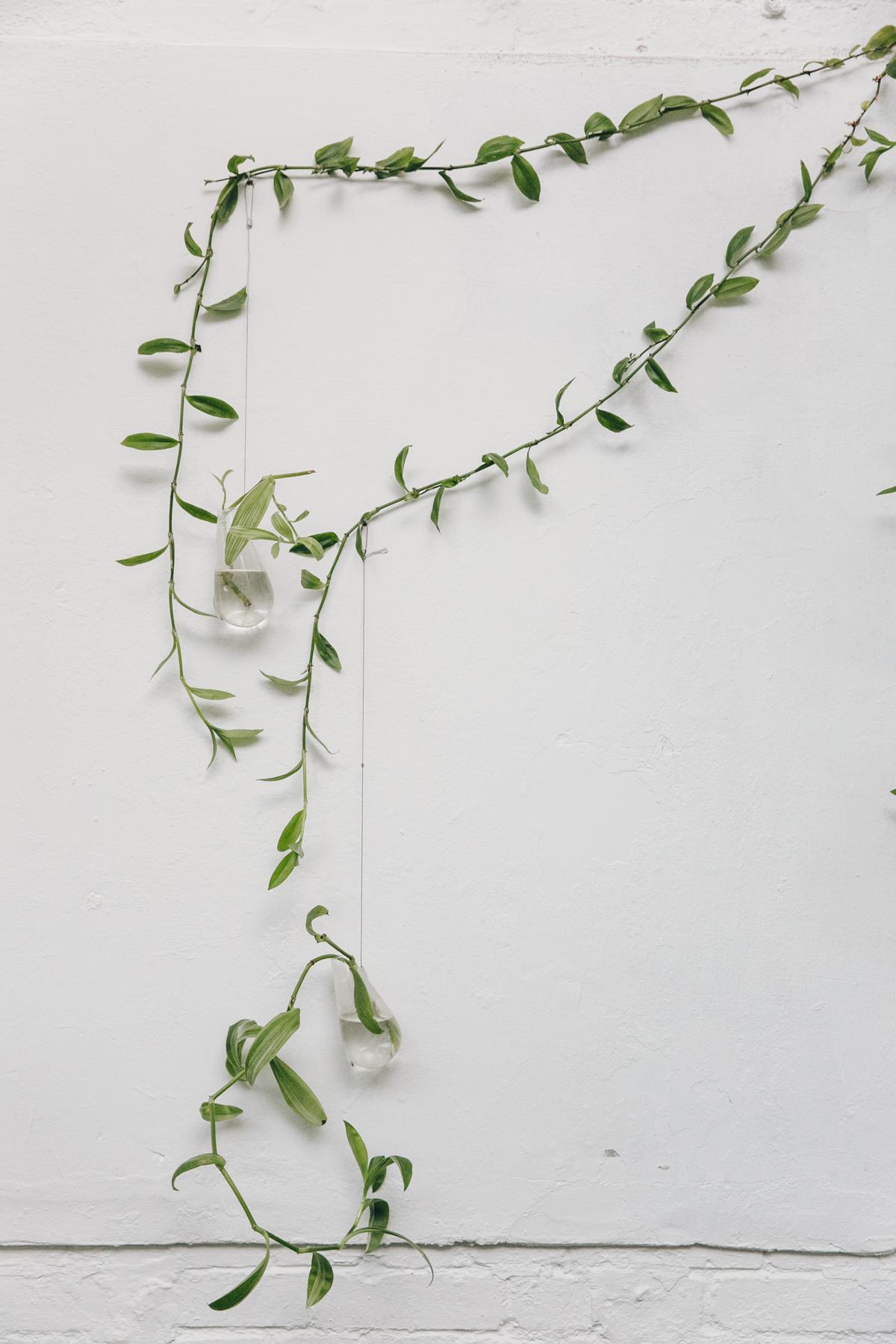 Plants in glass bottles.